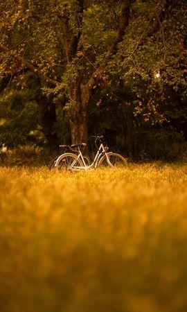 144572 descargar fondo de pantalla Miscelánea, Misceláneo, Bicicleta, Transporte, Árboles, Bosque: protectores de pantalla e imágenes gratis