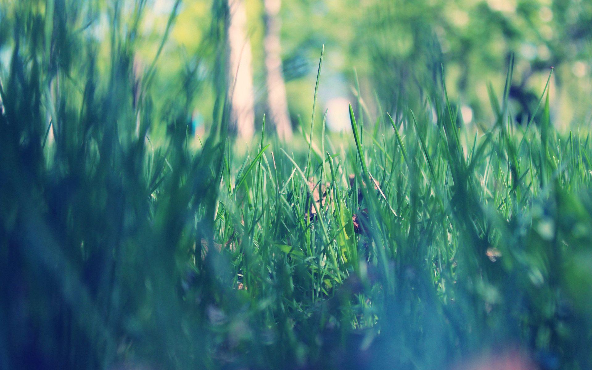 107403 Заставки и Обои Трава на телефон. Скачать Макро, Парк, Утро, Весна, Трава, Зеленая картинки бесплатно