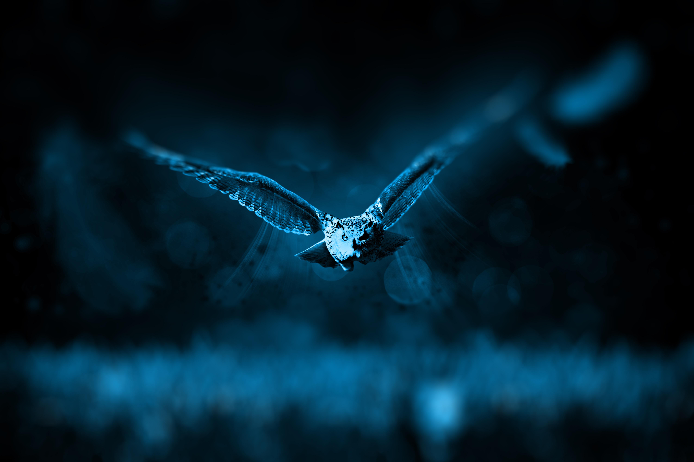 133462 Hintergrundbild herunterladen Eule, Tiere, Vogel, Raubtier, Predator, Flug, Photoshop - Bildschirmschoner und Bilder kostenlos