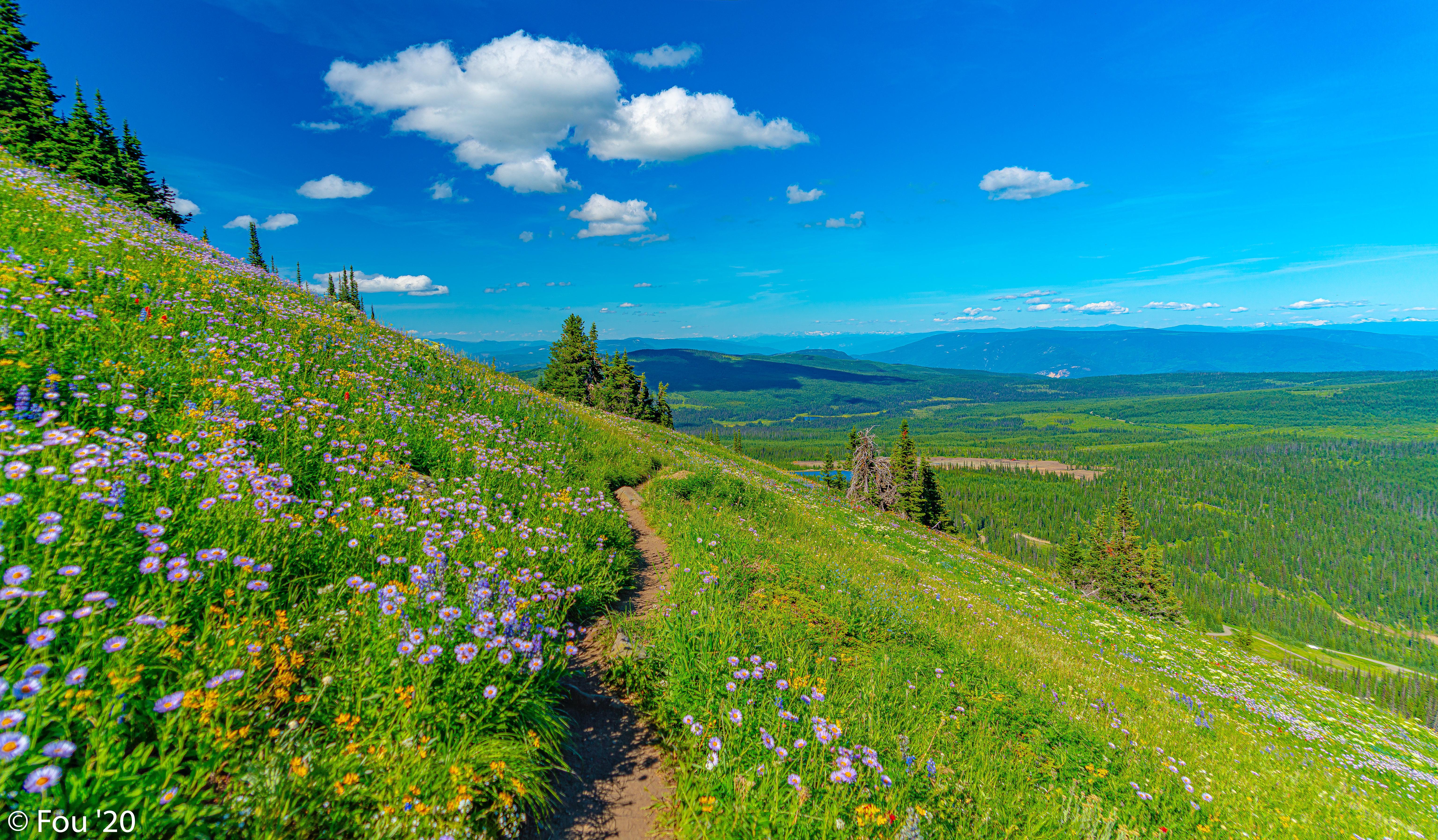 70462 скачать обои Пейзаж, Цветы, Природа, Трава, Горы, Тропинка - заставки и картинки бесплатно