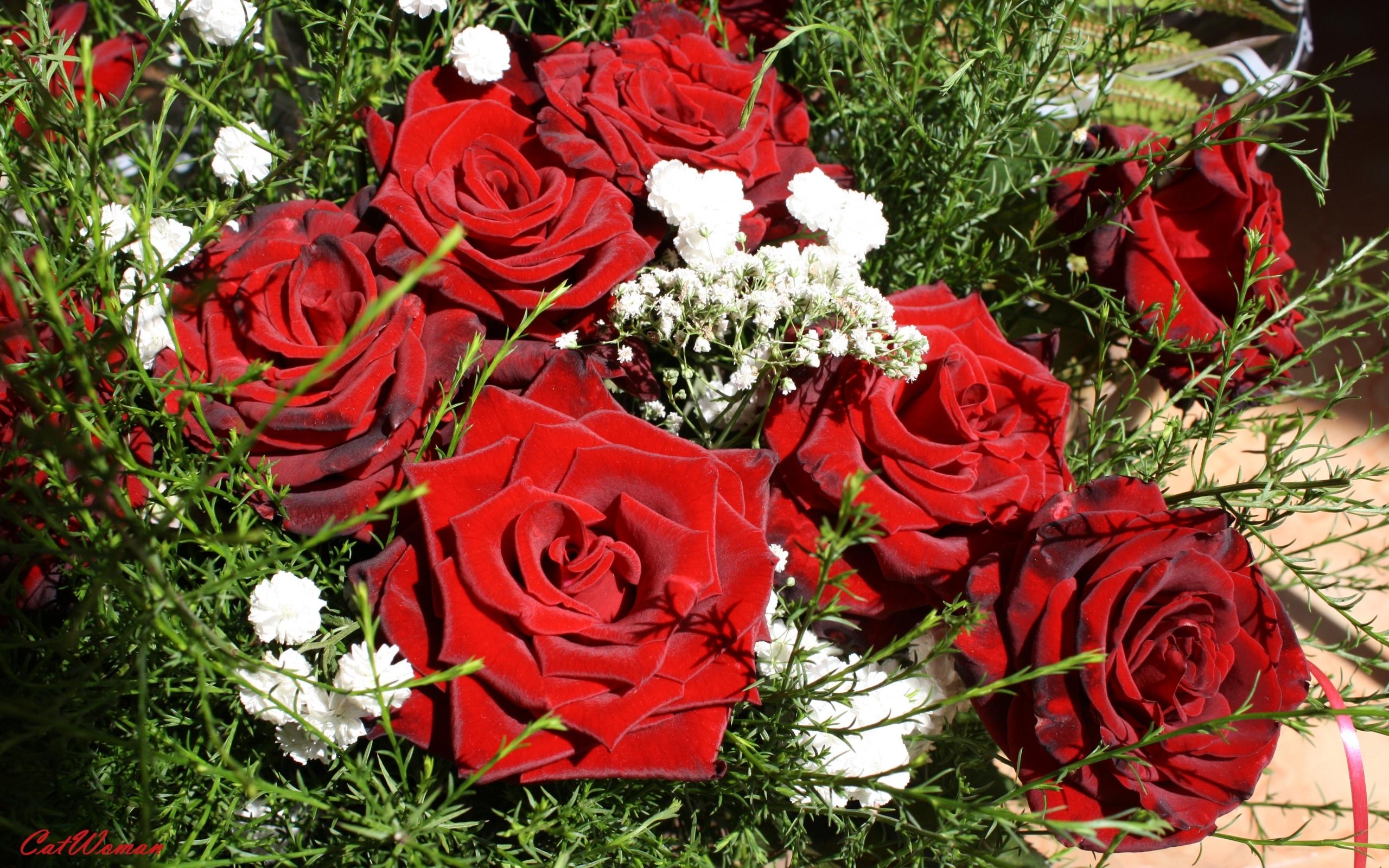 5197 скачать обои Растения, Цветы, Розы - заставки и картинки бесплатно