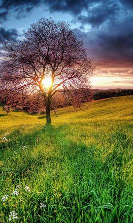 83641 скачать обои Природа, Закат, Поле, Небо, Дерево, Пейзаж - заставки и картинки бесплатно