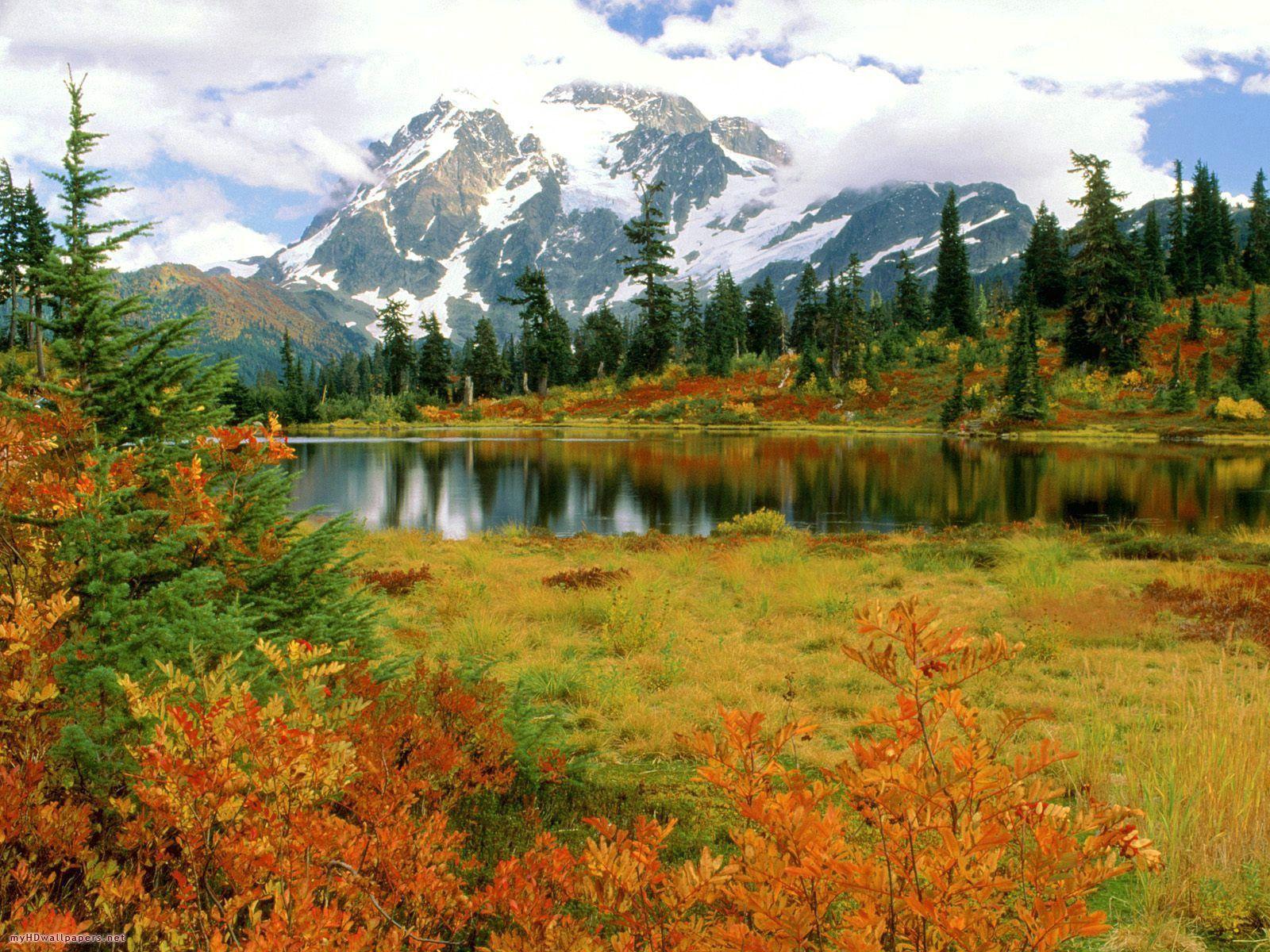 61561 скачать обои Природа, Деревья, Осень, Озеро, Даль, Свет - заставки и картинки бесплатно