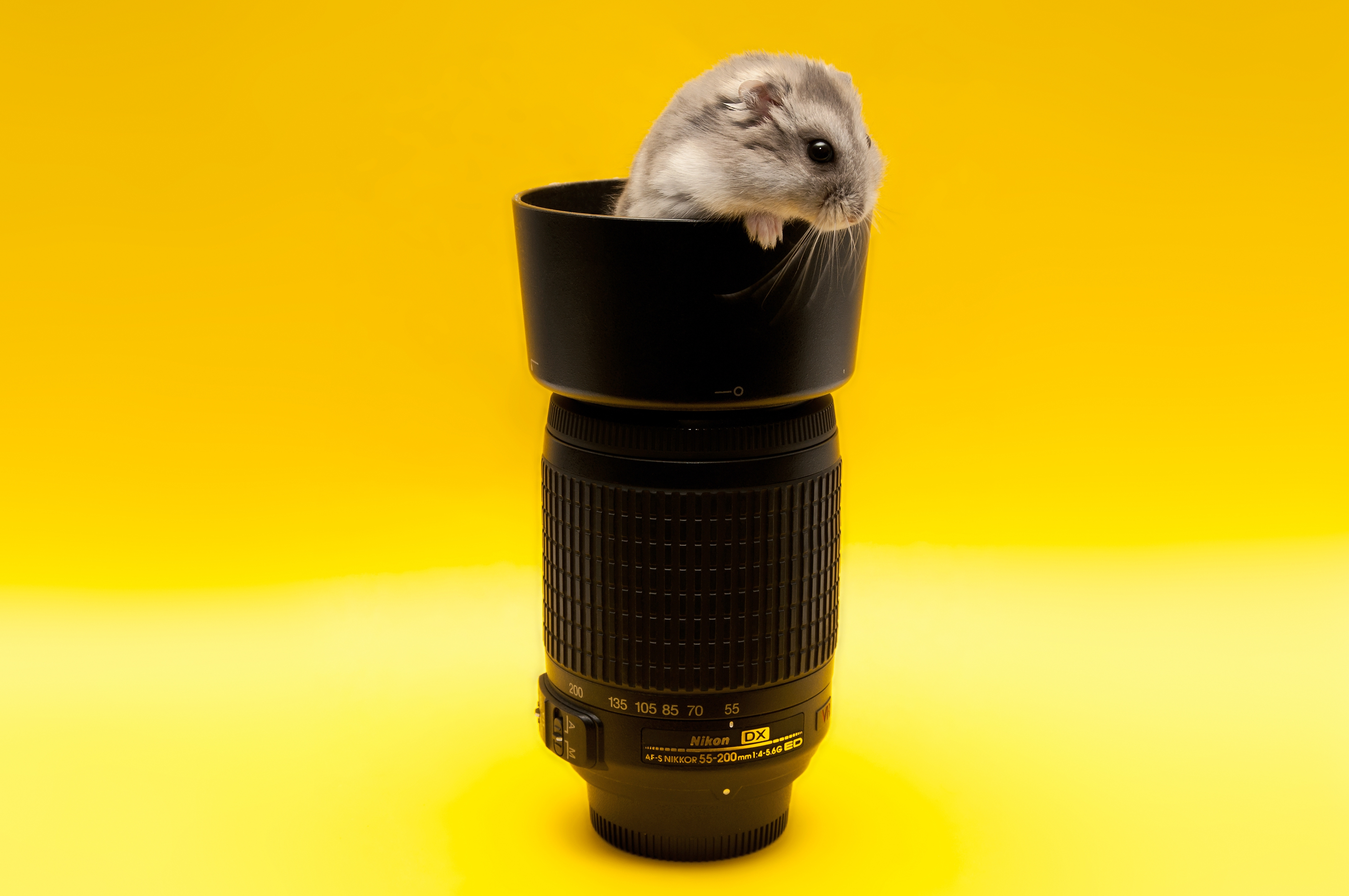 102058 download wallpaper Animals, Mouse, Lens, Climb, Rodent screensavers and pictures for free