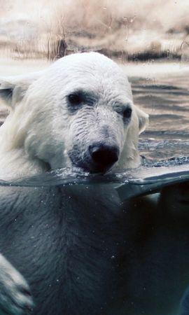 42938 baixar papel de parede Animais, Bears - protetores de tela e imagens gratuitamente