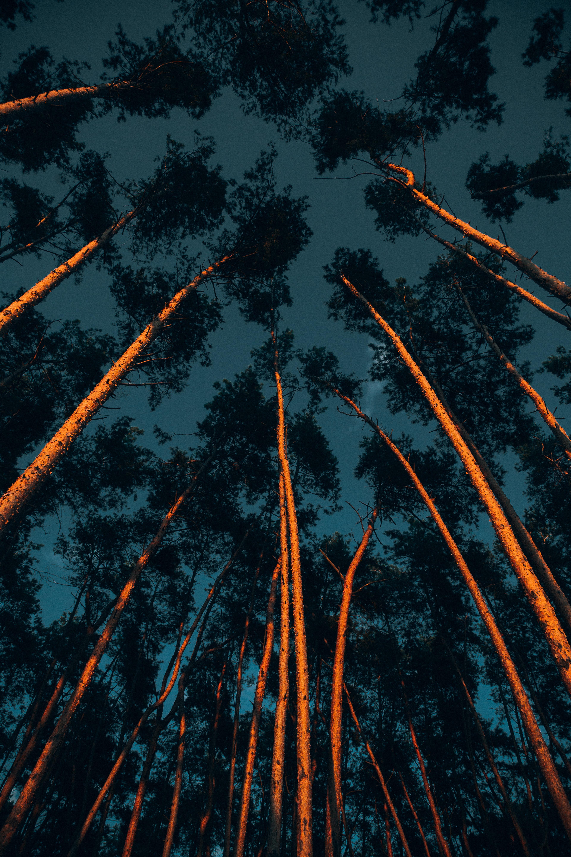 83386 скачать обои Лес, Деревья, Темные, Темный, Стволы, Верхушки, Кроны - заставки и картинки бесплатно