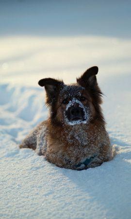 41195 baixar papel de parede Animais, Cães - protetores de tela e imagens gratuitamente