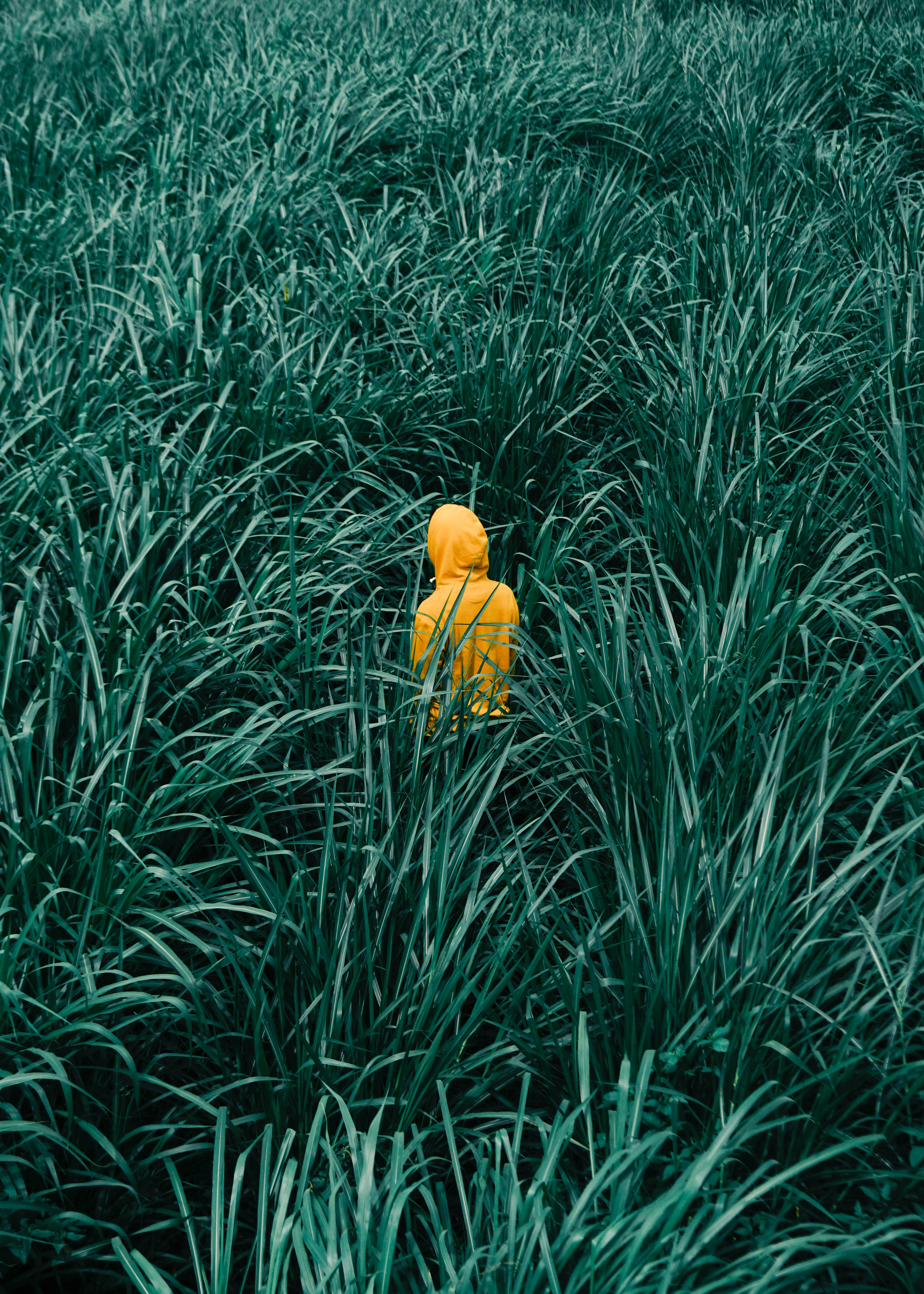 110152 download wallpaper Minimalism, Human, Person, Grass, Stroll screensavers and pictures for free