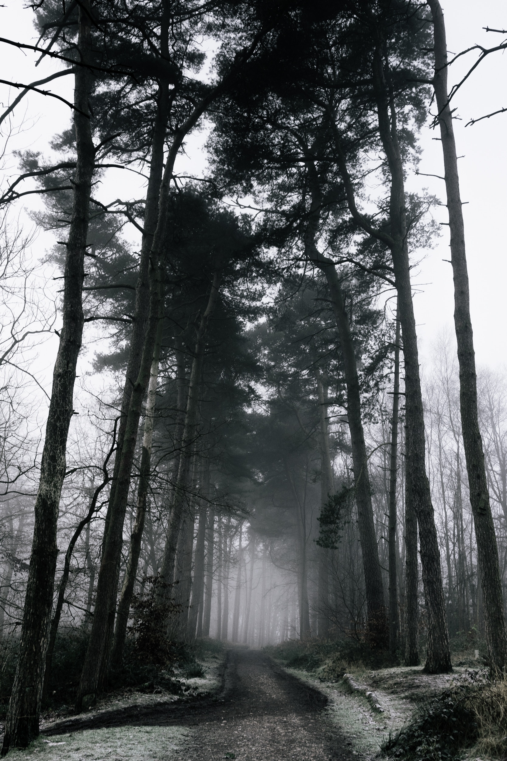 153606 download wallpaper Winter, Nature, Trees, Snow, Forest, Fog, Branches, Gloomy, Gloomily screensavers and pictures for free