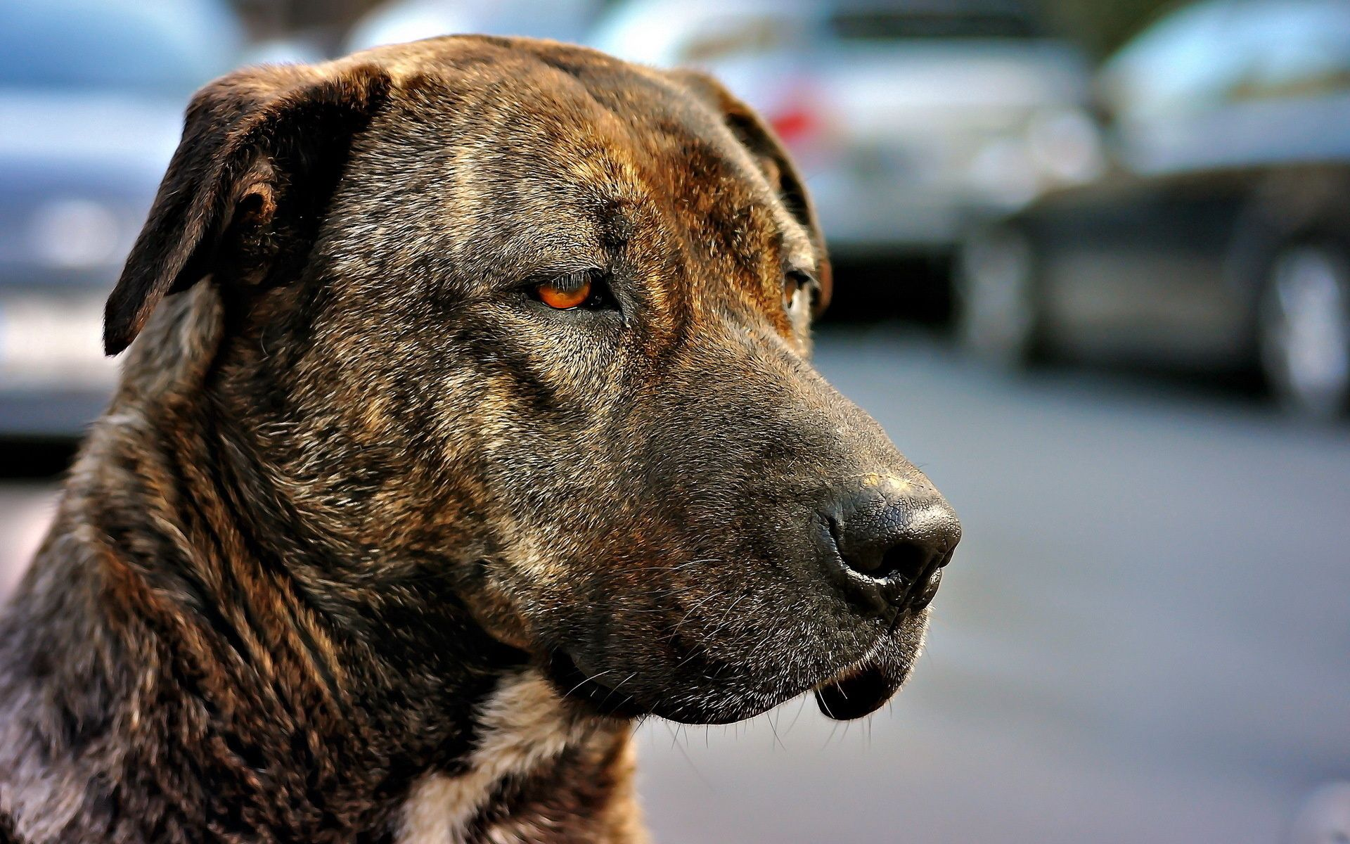 113324 download wallpaper Animals, Dog, Muzzle, Sight, Opinion, Color, Sadness, Sorrow screensavers and pictures for free