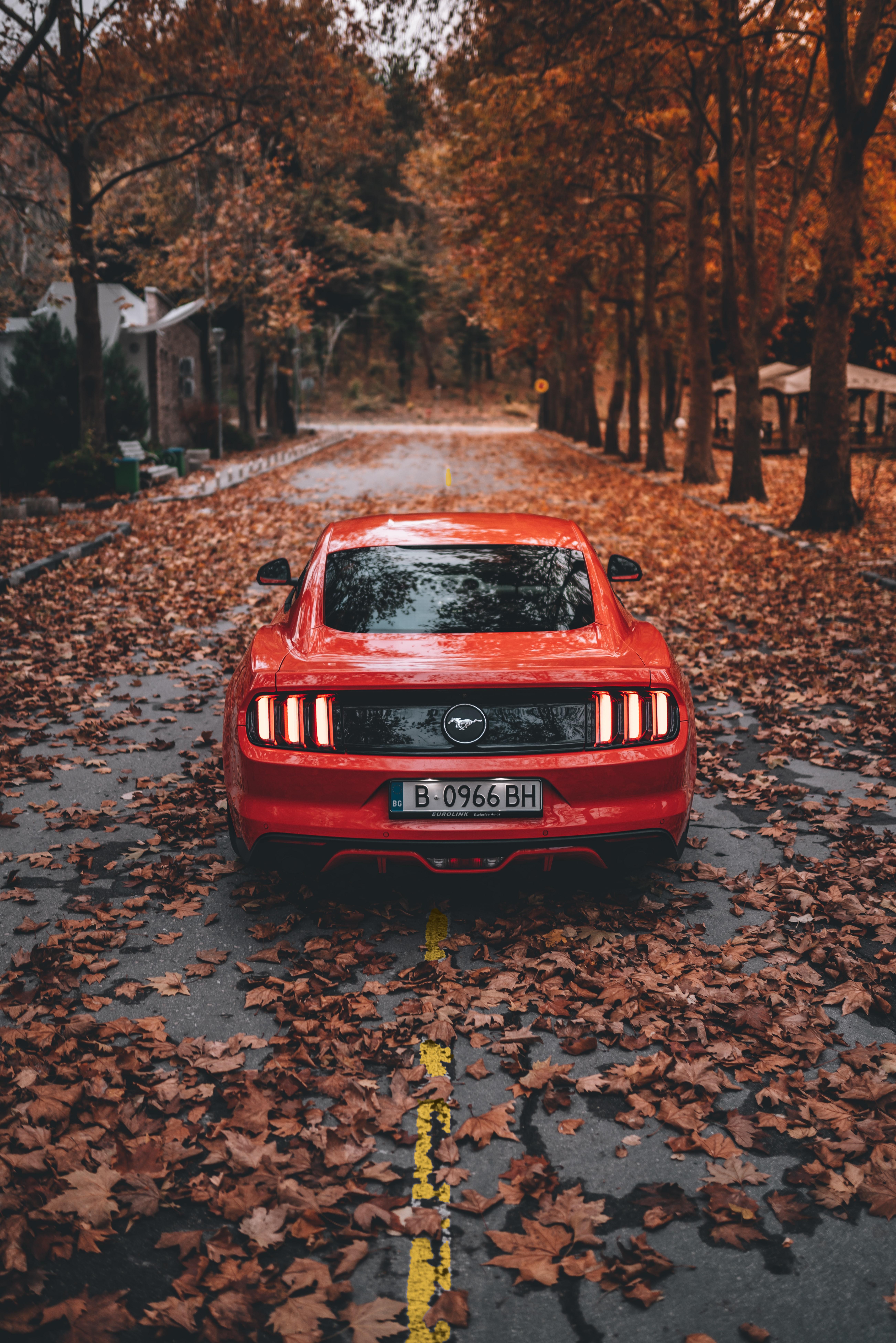 59195 скачать обои Осень, Форд (Ford), Тачки (Cars), Дорога, Красный, Автомобиль, Спорткар, Ford Mustang - заставки и картинки бесплатно