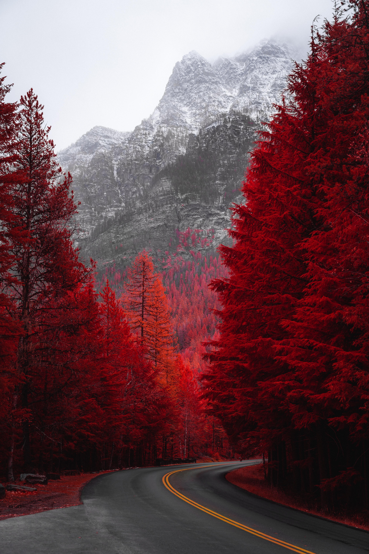 61856 скачать обои Пейзаж, Природа, Деревья, Красный, Дорога, Гора, Поворот - заставки и картинки бесплатно