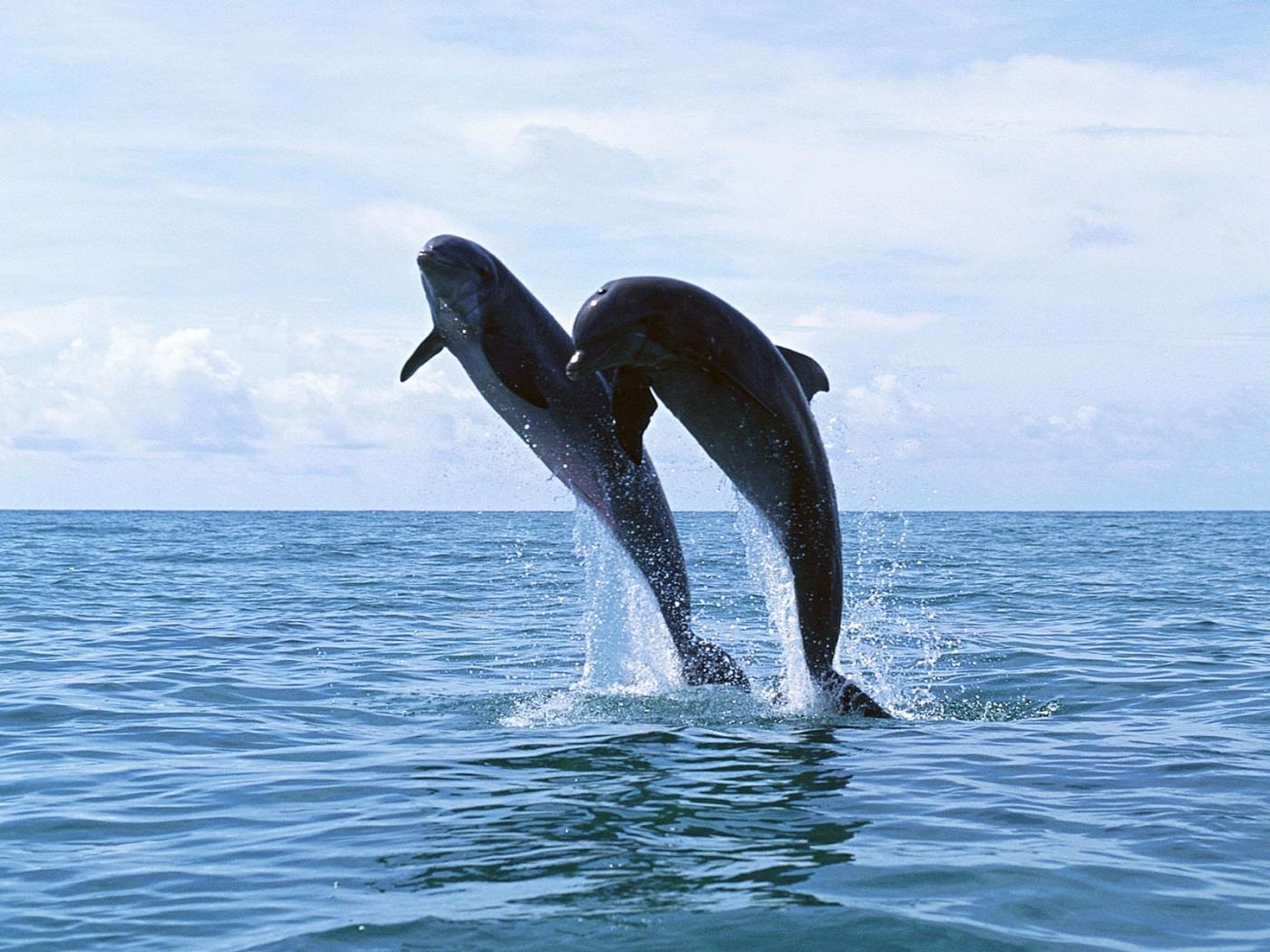 41878 papel de parede 540x960 em seu telefone gratuitamente, baixe imagens Golfinhos, Animais 540x960 em seu celular