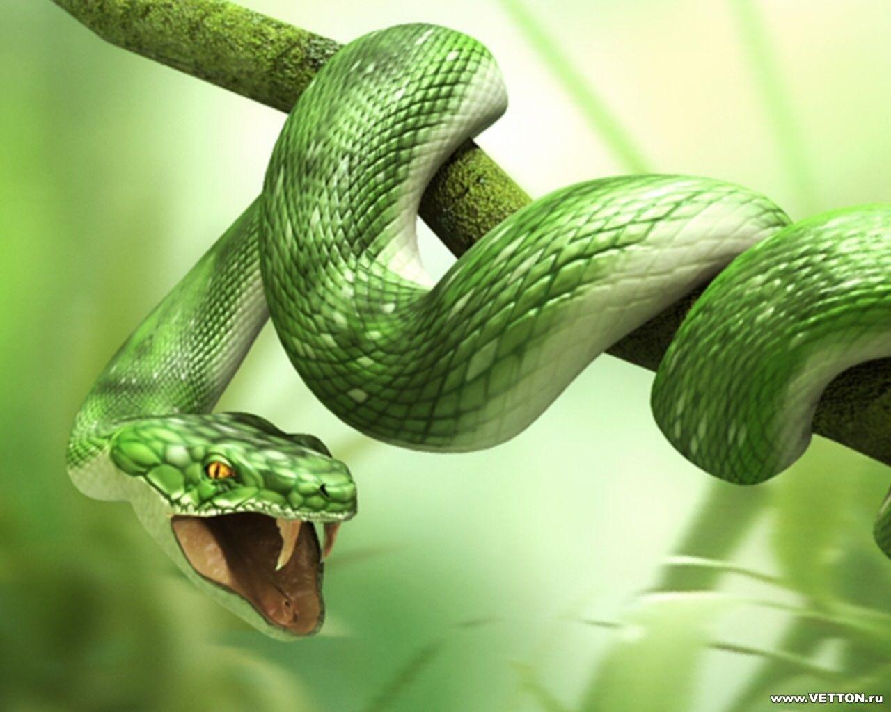 2728 скачать обои Змеи, Животные, Арт - заставки и картинки бесплатно