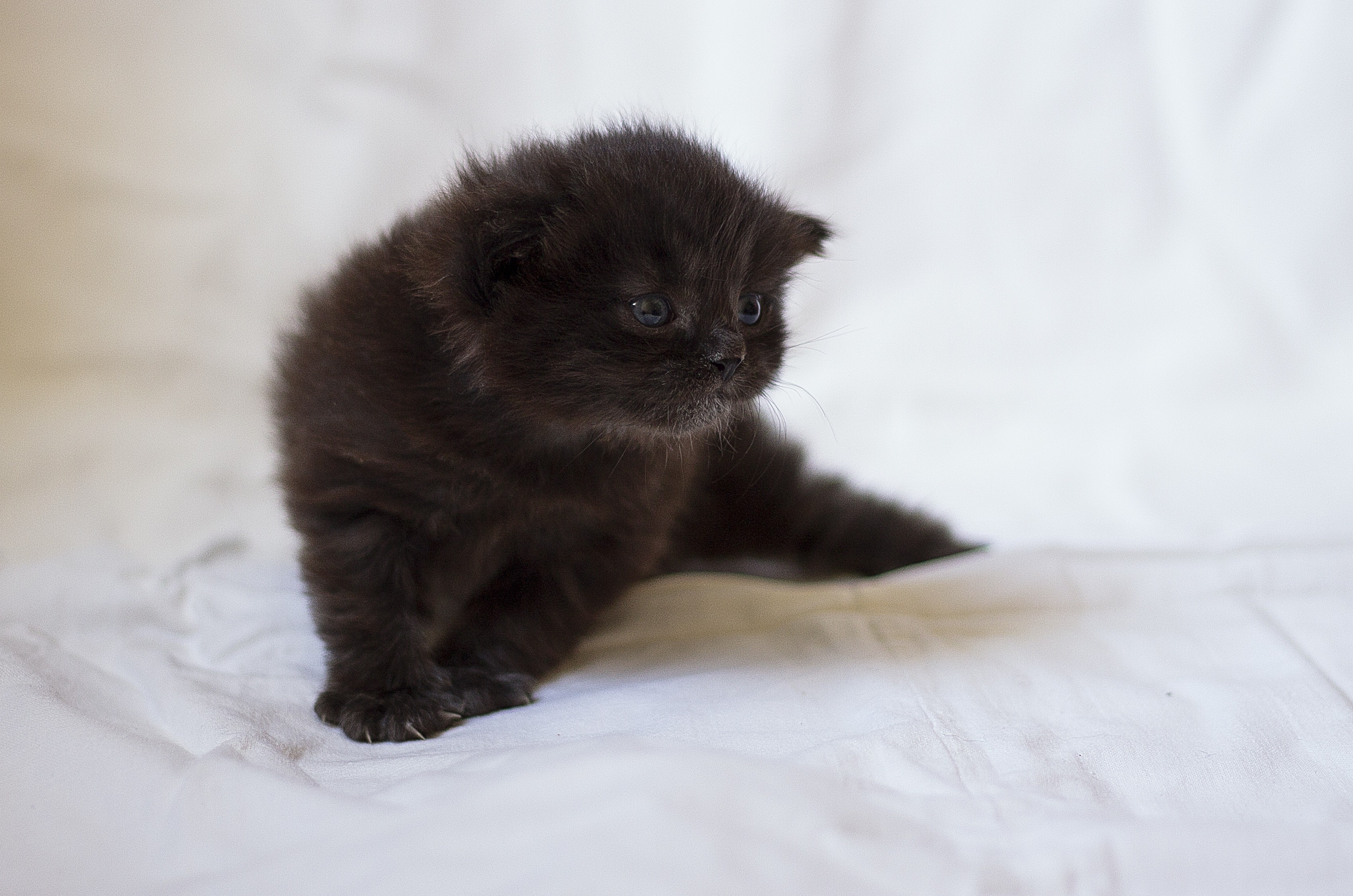 154931 Screensavers and Wallpapers Kitten for phone. Download Animals, Fluffy, Kitty, Kitten, Sight, Opinion, Kid, Tot pictures for free
