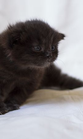 154931 download wallpaper Animals, Kitty, Kitten, Fluffy, Sight, Opinion, Kid, Tot screensavers and pictures for free
