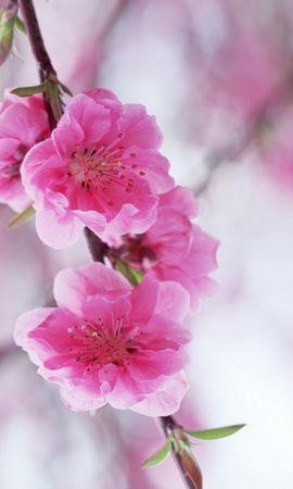 1992 descargar fondo de pantalla Plantas, Flores: protectores de pantalla e imágenes gratis