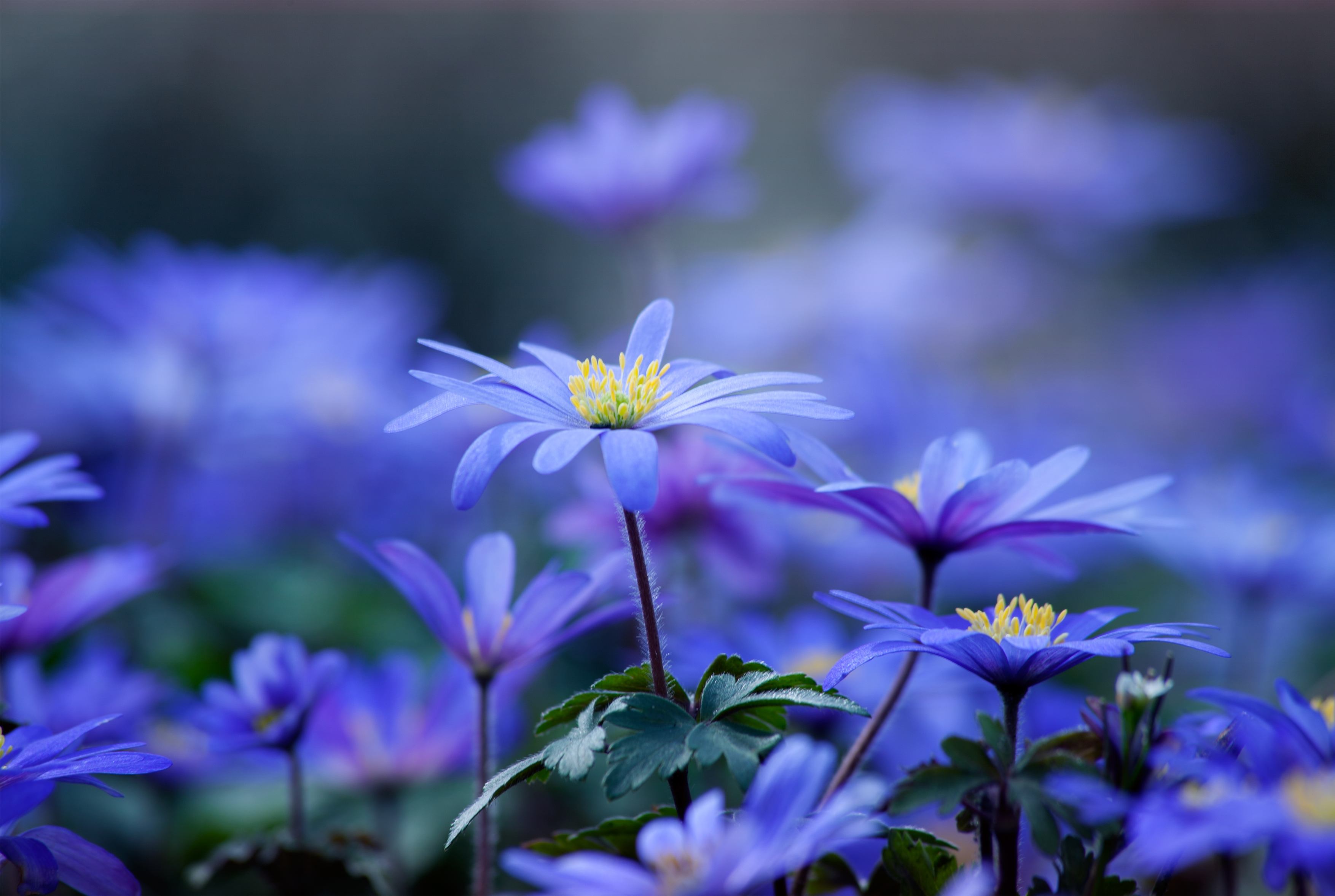 128295 скачать обои Цветы, Лепестки, Листья, Макро - заставки и картинки бесплатно