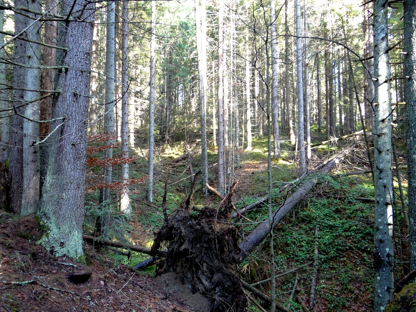 24806 скачать обои Пейзаж, Деревья - заставки и картинки бесплатно