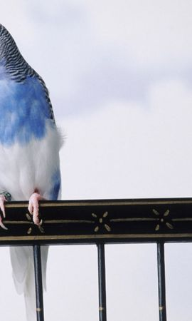 38441 baixar papel de parede Animais, Aves, Papagaios - protetores de tela e imagens gratuitamente