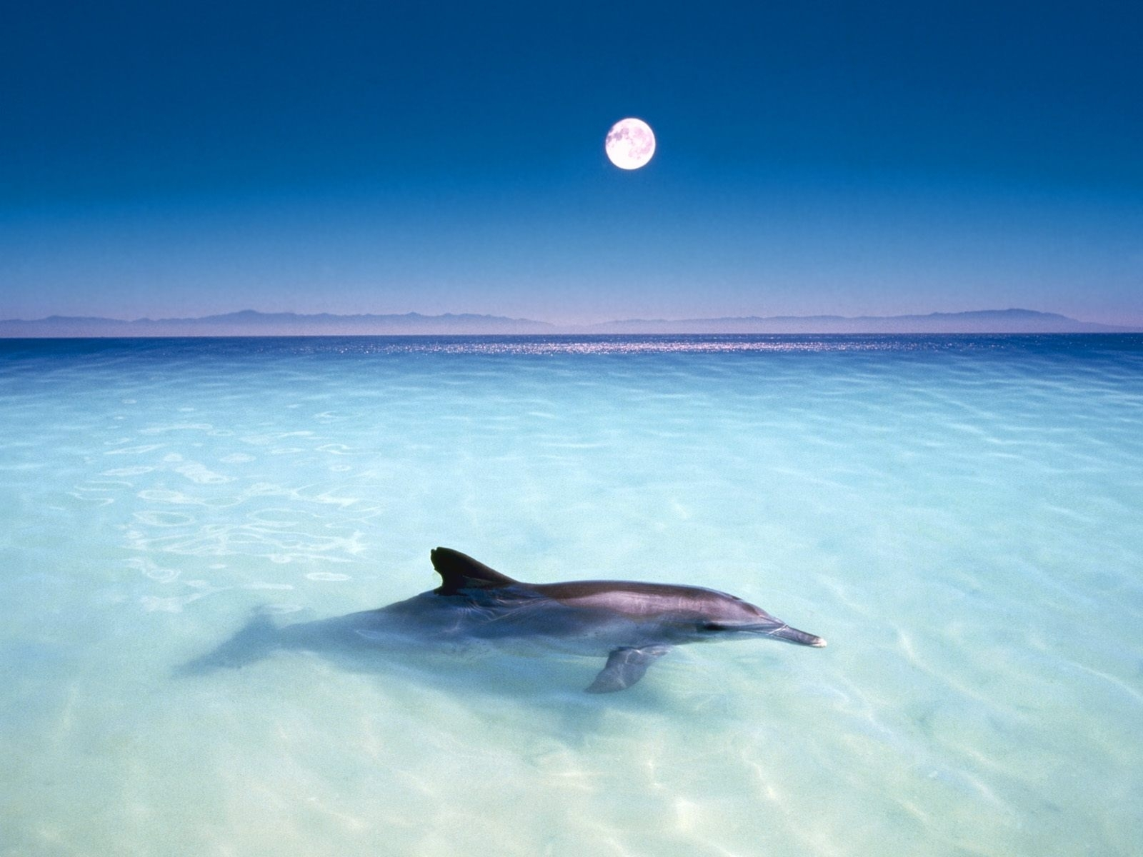 3784 download wallpaper Animals, Water, Dolfins, Sea, Fishes screensavers and pictures for free