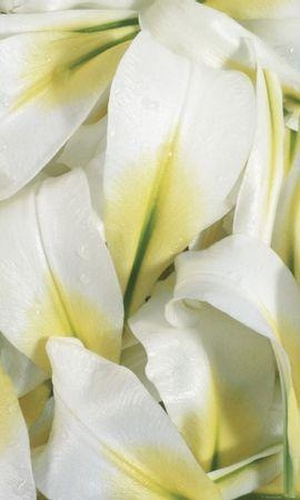 25447 скачать обои Растения, Цветы - заставки и картинки бесплатно