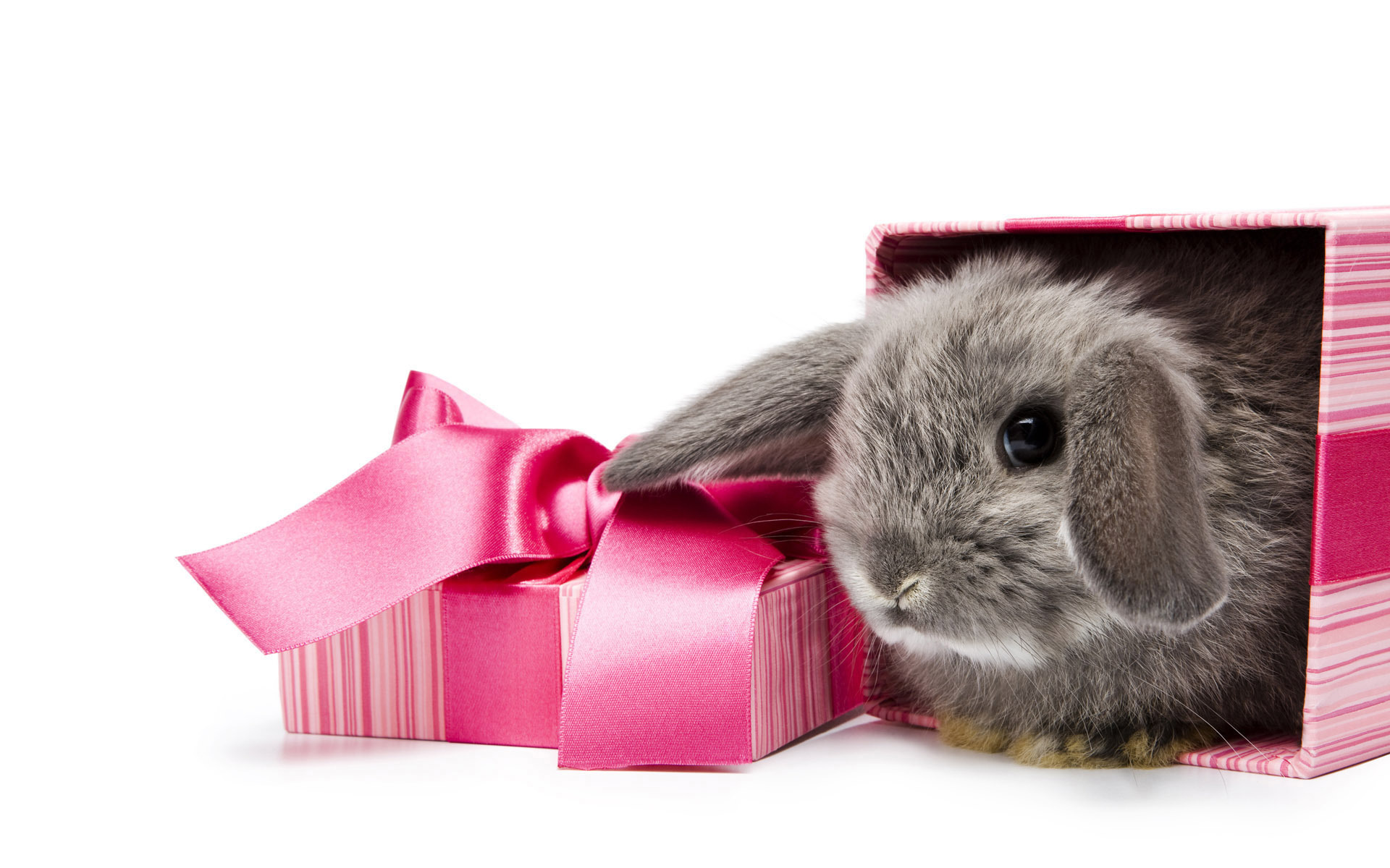 11489 download wallpaper Animals, Rodents, Rabbits screensavers and pictures for free