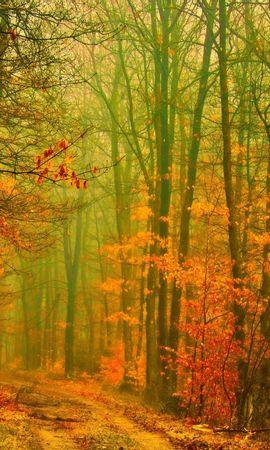 28232 скачать обои Пейзаж, Деревья, Дороги, Осень - заставки и картинки бесплатно