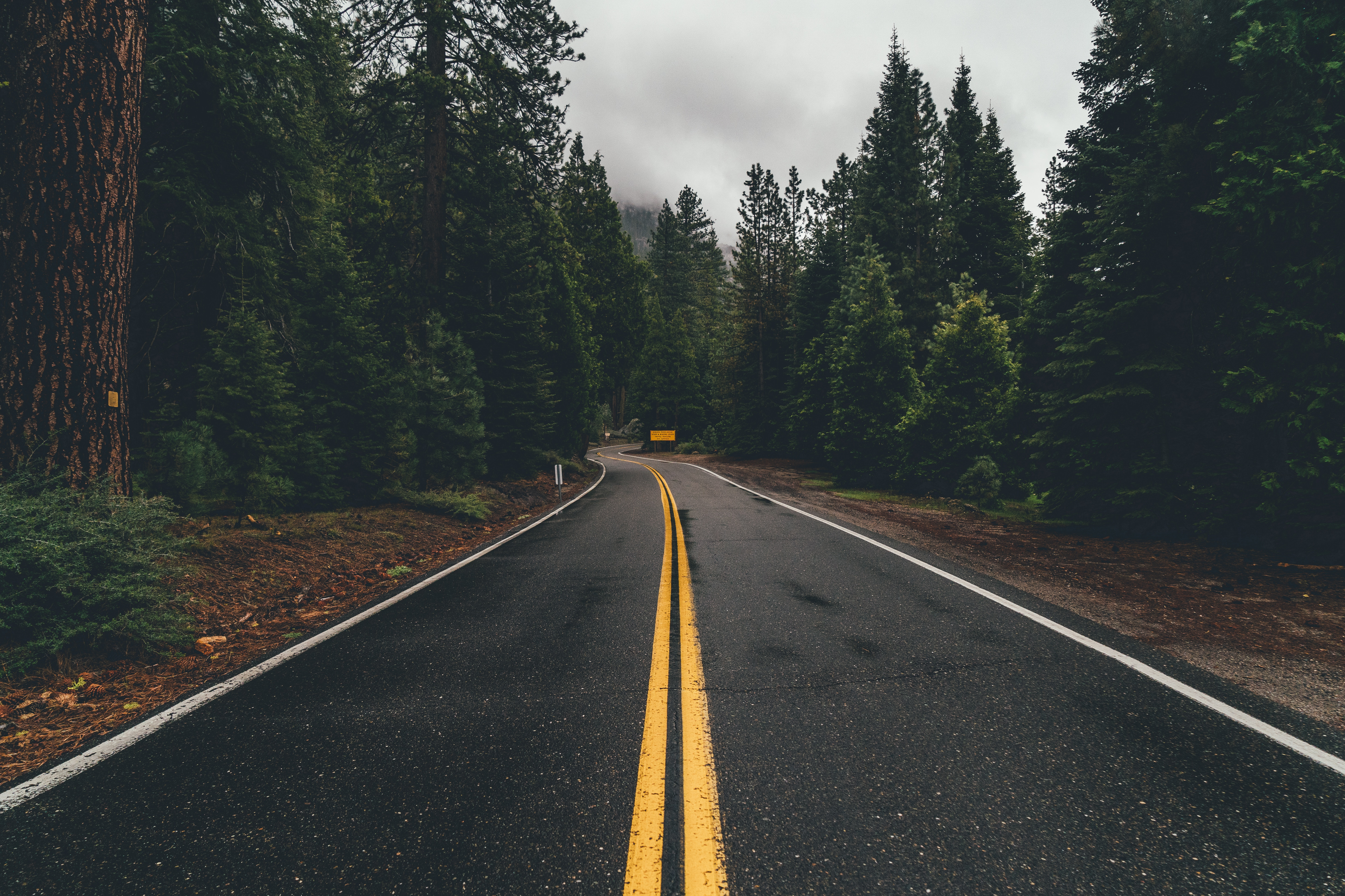 137978 Screensavers and Wallpapers Road for phone. Download Nature, Trees, Road, Turn, Markup, Forest, Asphalt pictures for free