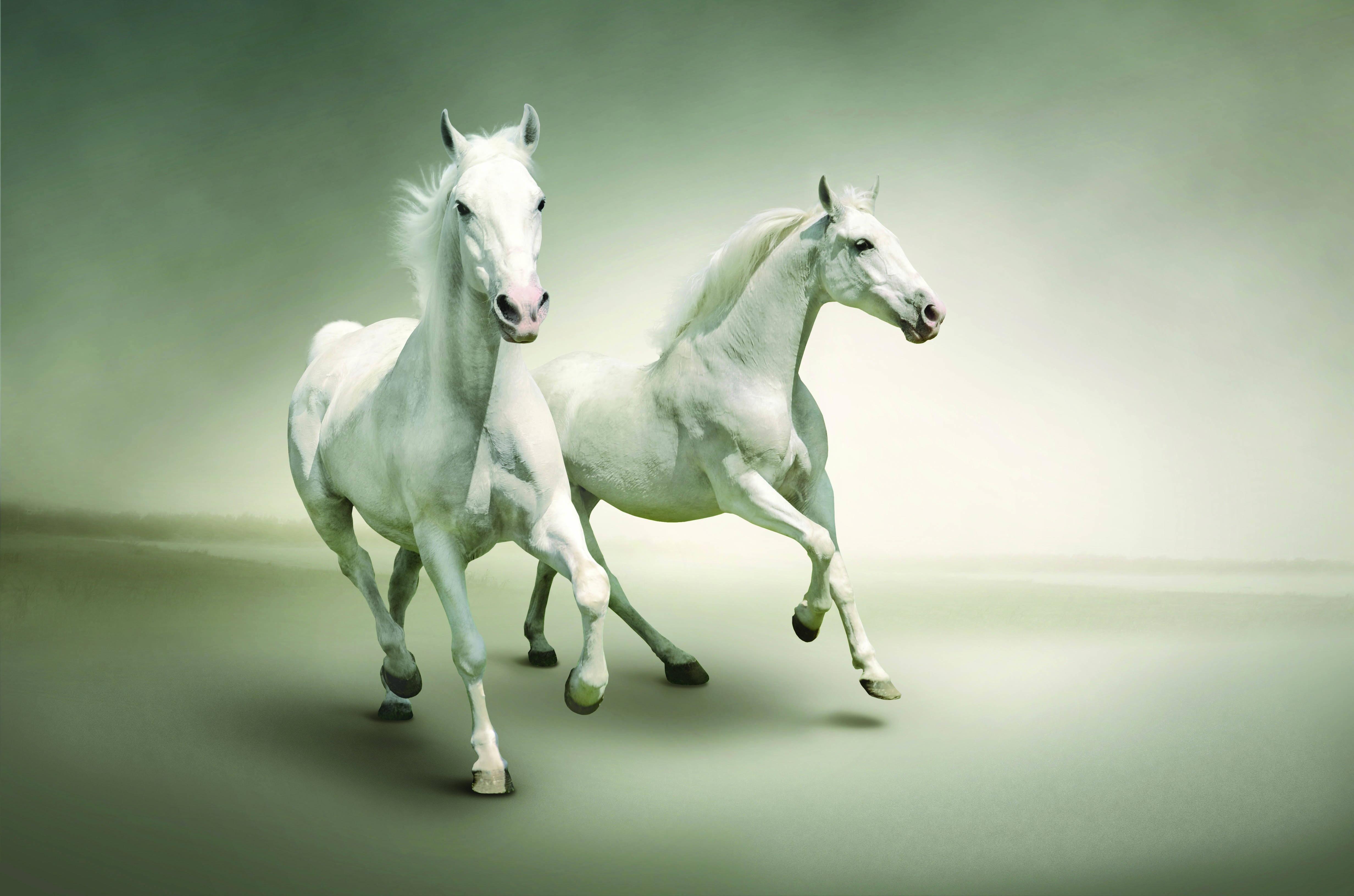 139908 скачать обои Животные, Лошади, Бег, Пара - заставки и картинки бесплатно