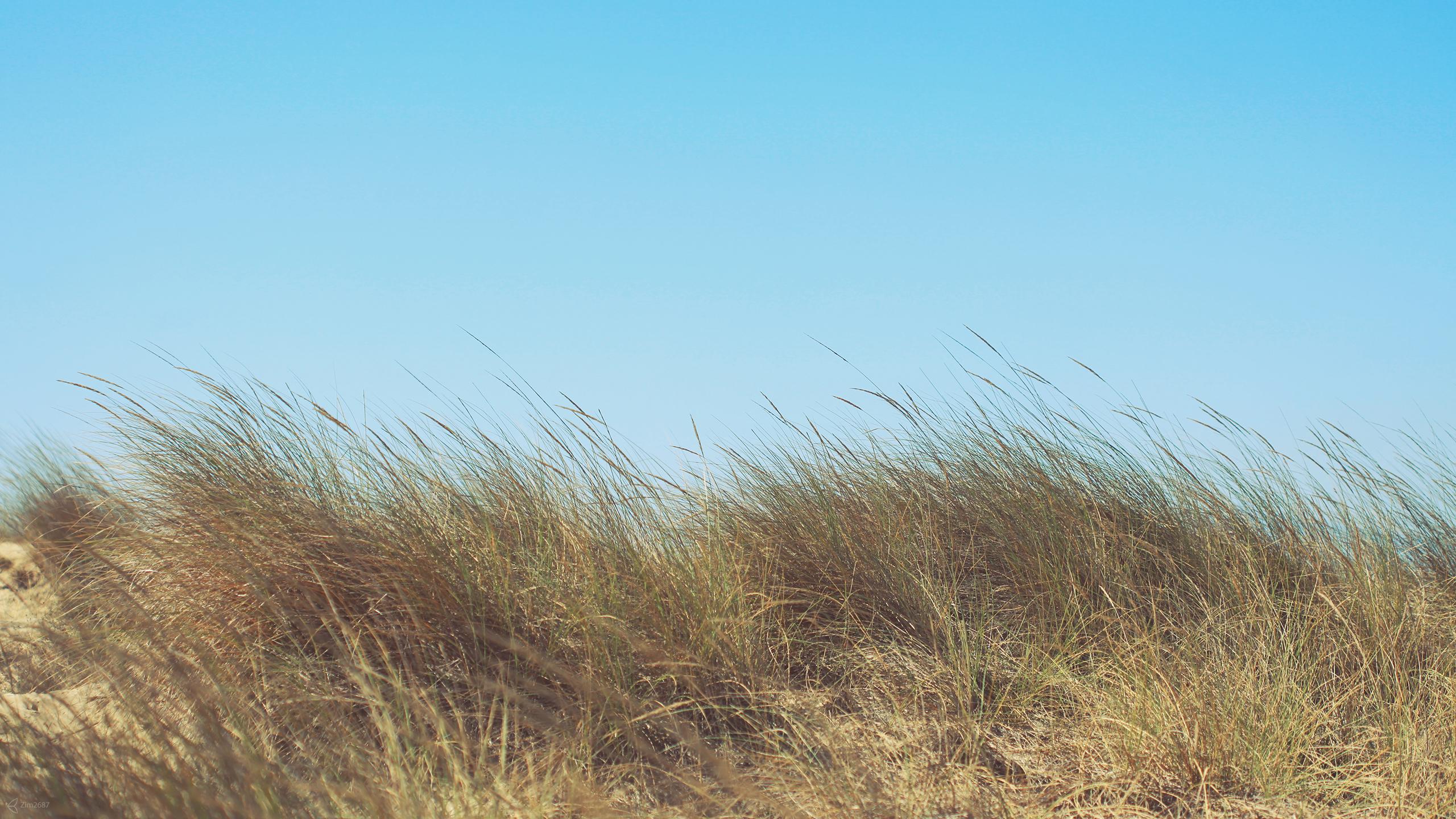 18562 скачать обои Растения, Пейзаж, Трава, Небо - заставки и картинки бесплатно