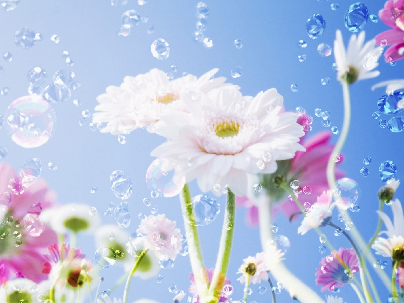 24584 download wallpaper Plants, Flowers, Drops screensavers and pictures for free