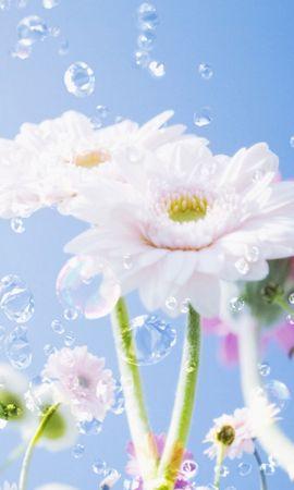 24584 скачать обои Растения, Цветы, Капли - заставки и картинки бесплатно