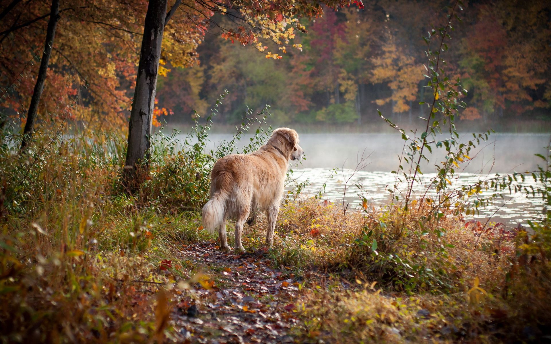 86559 download wallpaper Animals, Dog, Rivers, Grass, Stroll screensavers and pictures for free