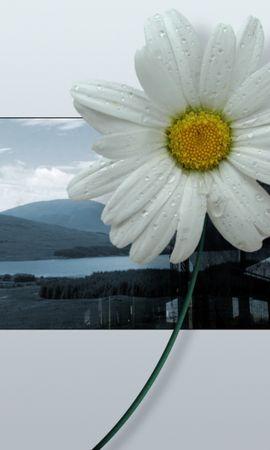 47090 baixar papel de parede Plantas, Flores - protetores de tela e imagens gratuitamente