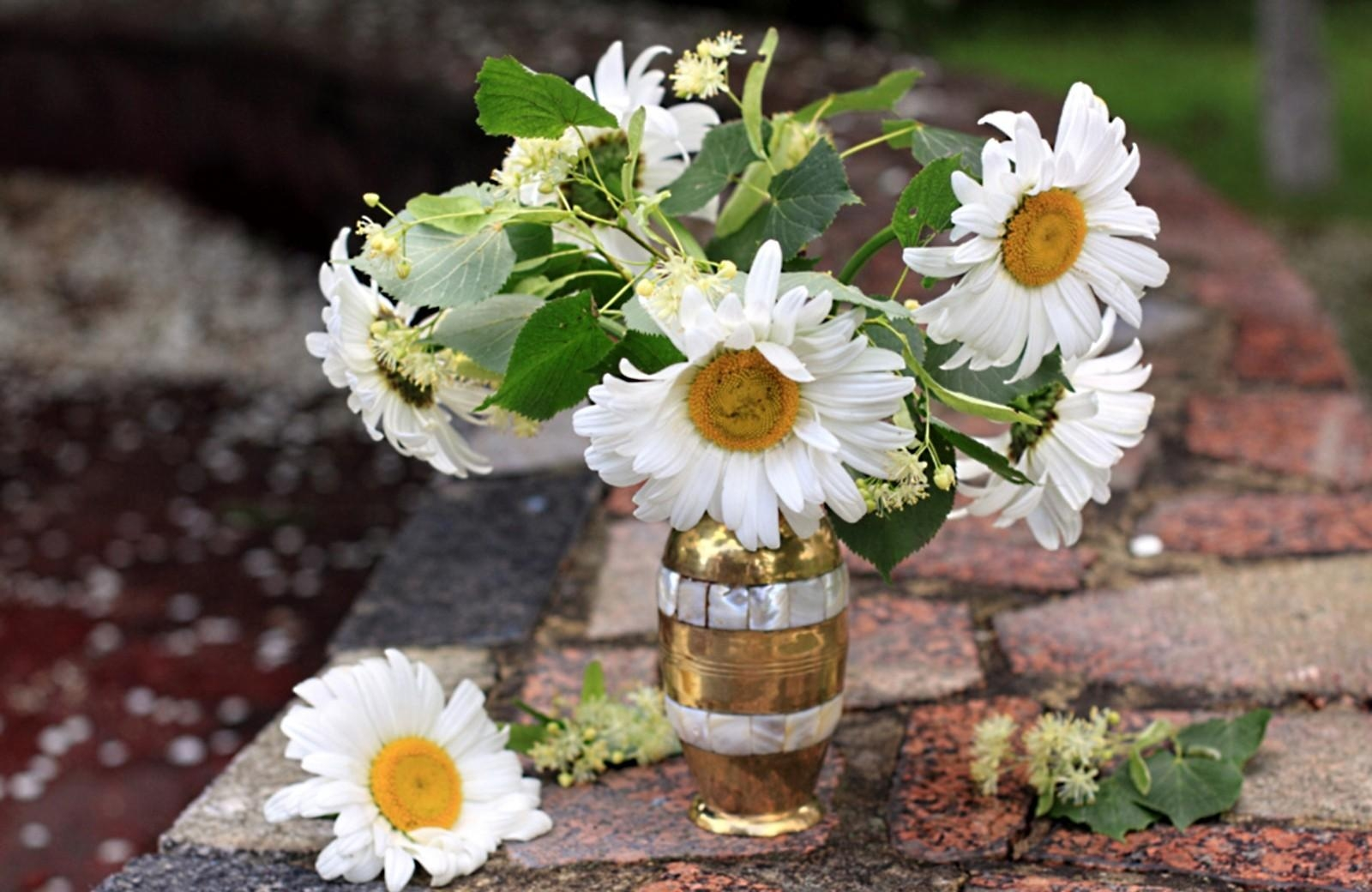 122609 download wallpaper Flowers, Camomile, Bud, Bouquet, Vase screensavers and pictures for free