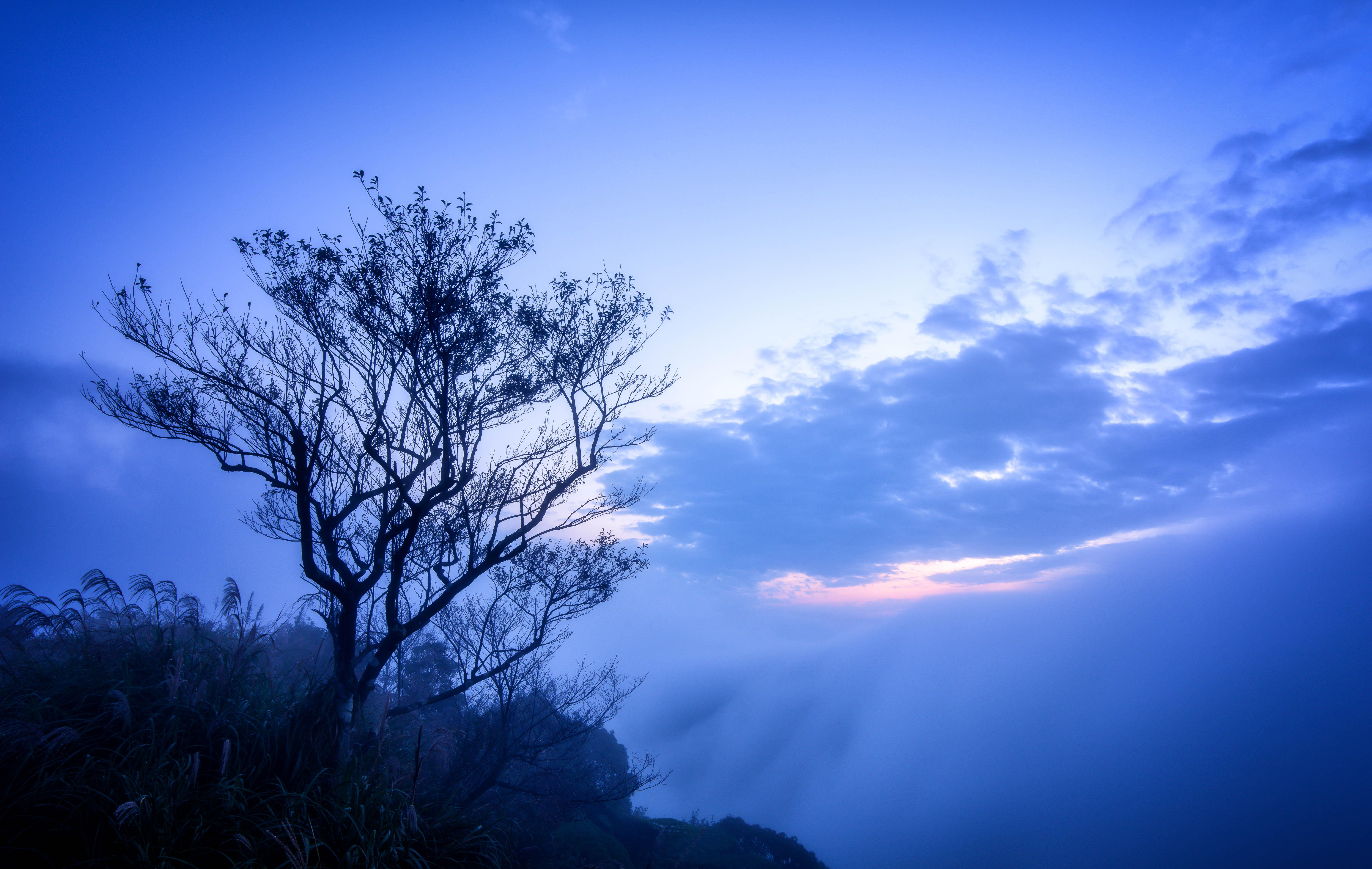 131930 télécharger le fond d'écran Nature, Sky, Nuages, Bois, Arbre, Brouillard, Branches - économiseurs d'écran et images gratuitement