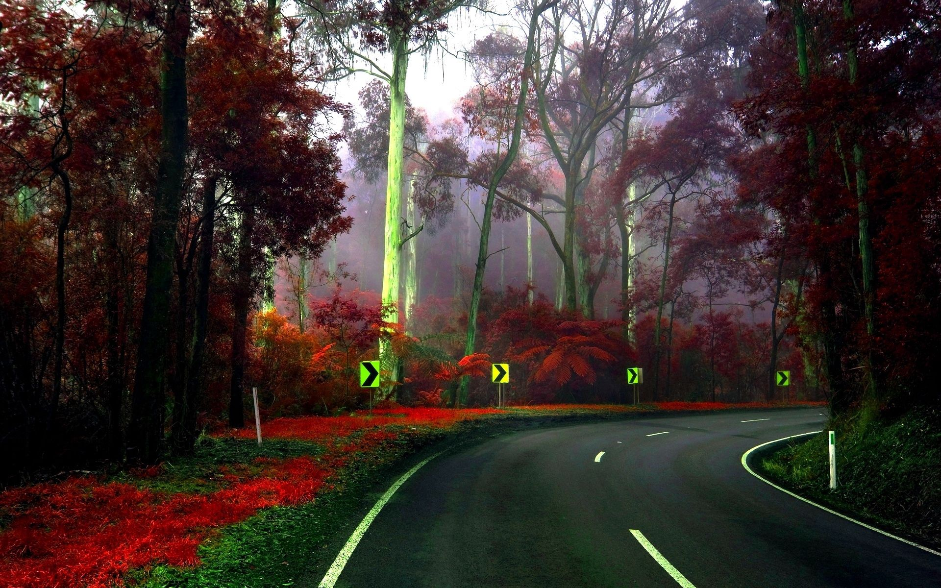 148572 Screensavers and Wallpapers Signs for phone. Download Nature, Trees, Signs, Road, Turn, Arboretum pictures for free