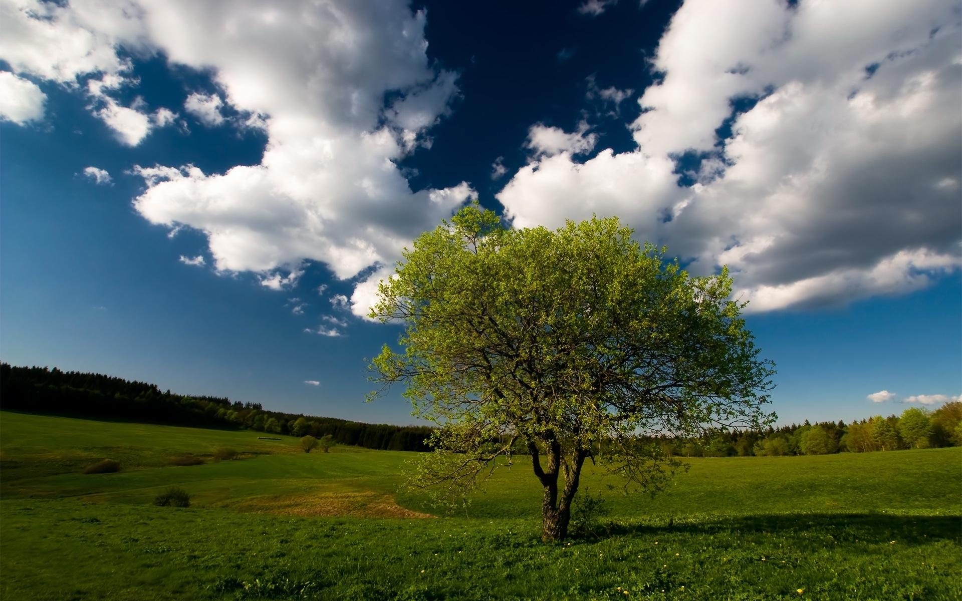 25851 скачать обои Пейзаж, Деревья, Поля, Небо, Облака - заставки и картинки бесплатно
