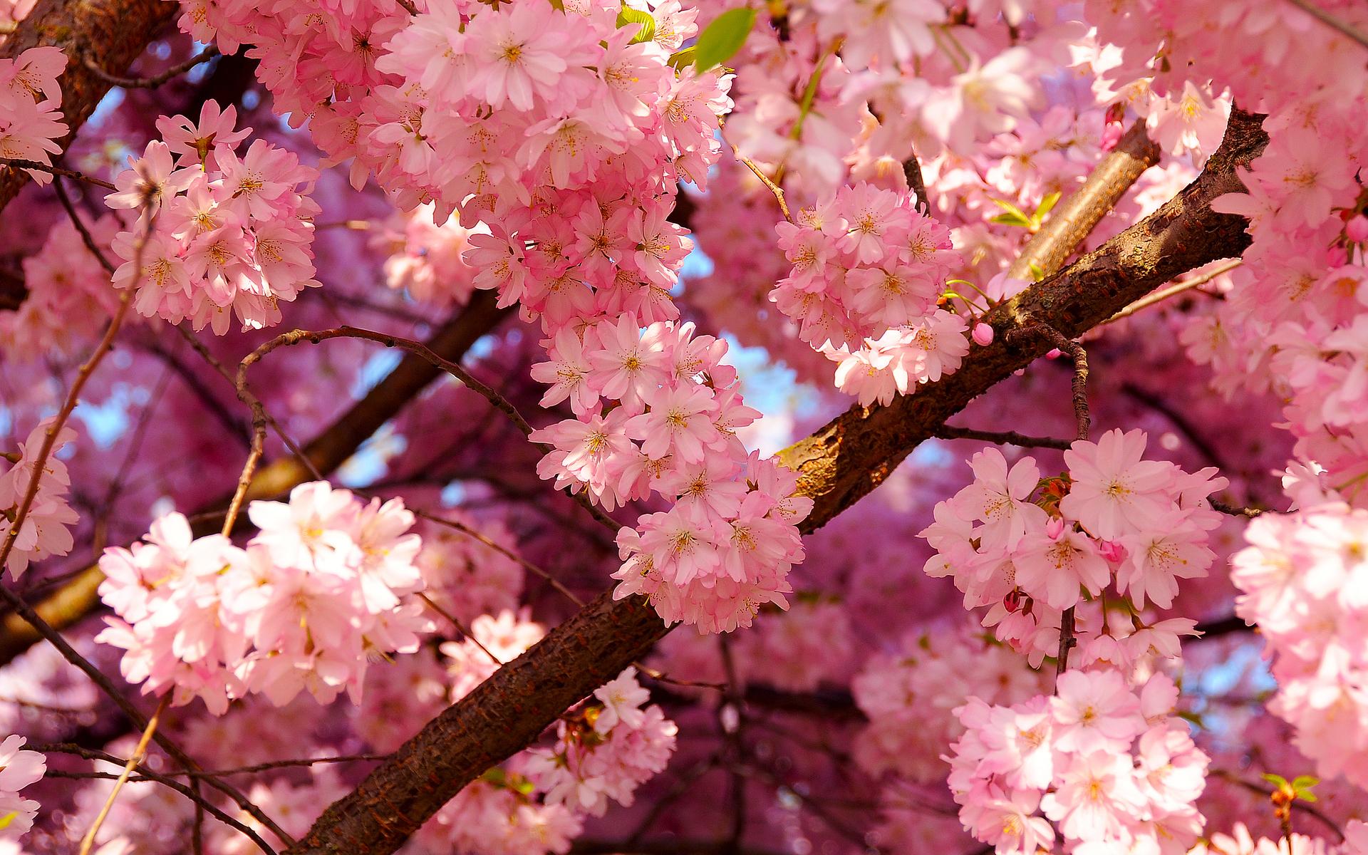 41520 скачать обои Природа, Пейзаж, Растения - заставки и картинки бесплатно