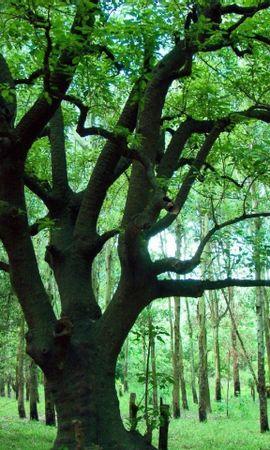 27351 скачать обои Растения, Пейзаж, Деревья - заставки и картинки бесплатно