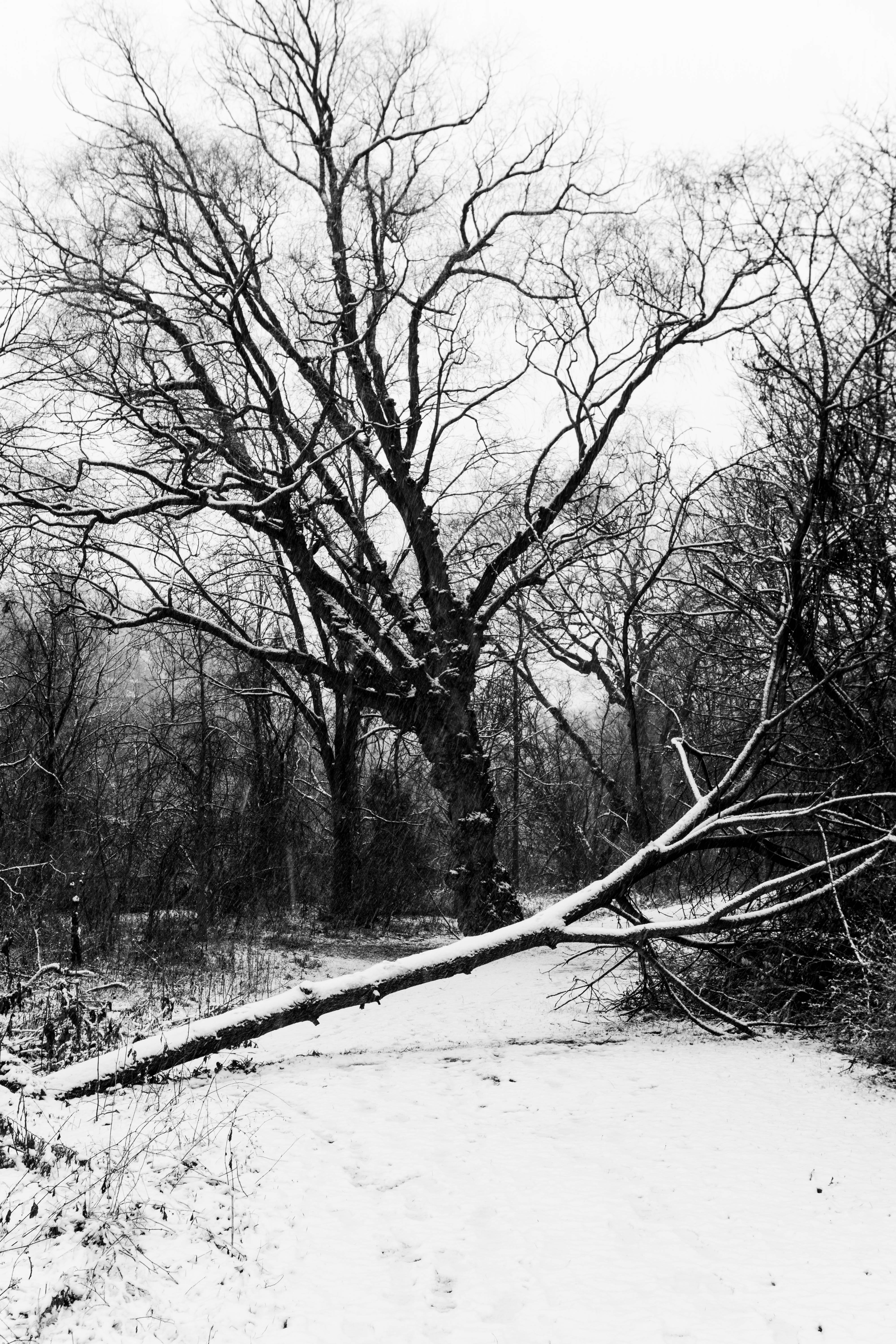 81164 free wallpaper 1080x2400 for phone, download images Winter, Nature, Trees, Snow, Bw, Chb 1080x2400 for mobile