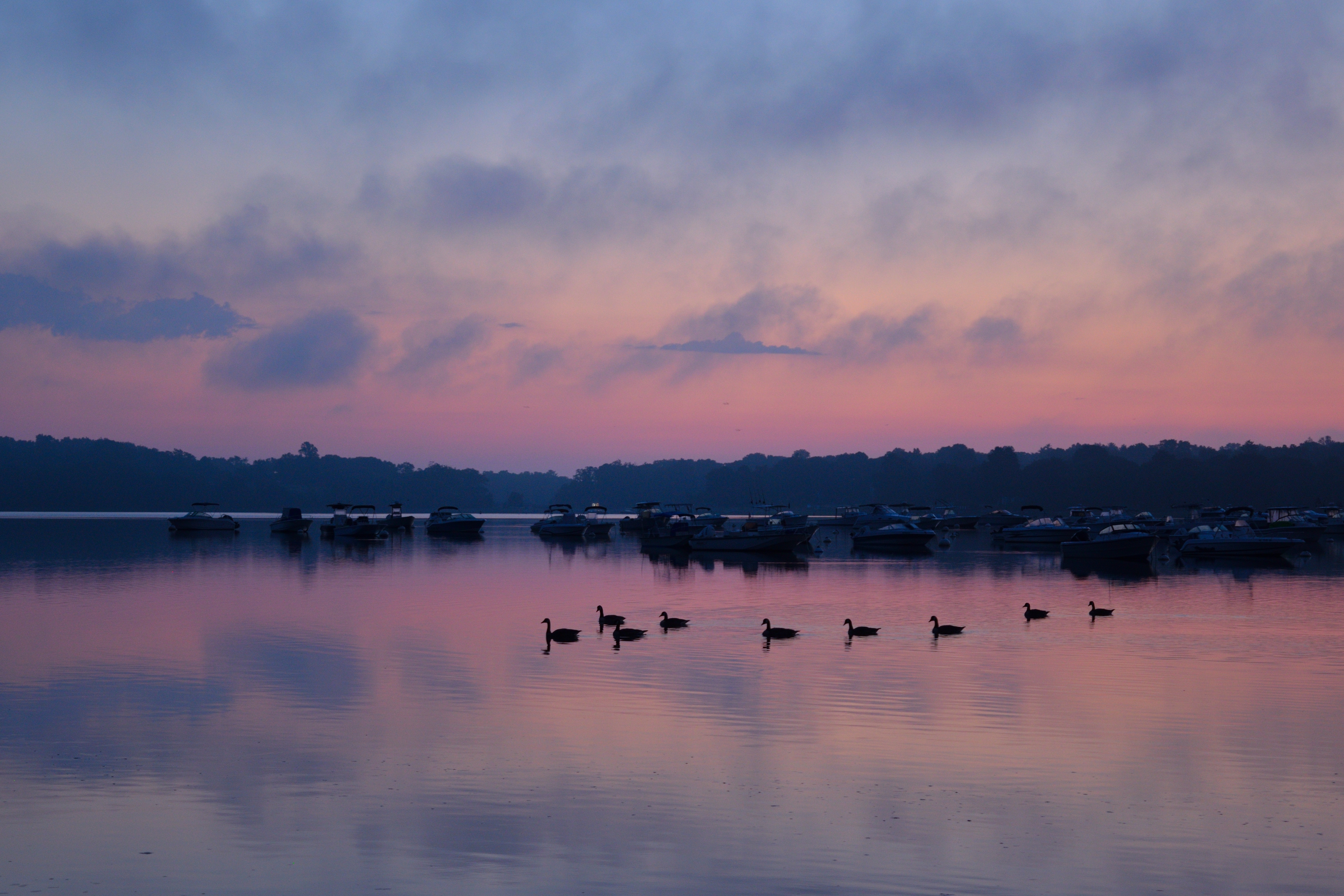 121108 download wallpaper Nature, Swans, Lake, Dusk, Twilight, Trees, Sky, Birds screensavers and pictures for free