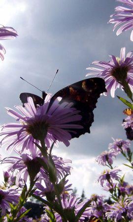139056 baixar papel de parede Natureza, Borboleta, Jardim, Sol, Flores - protetores de tela e imagens gratuitamente
