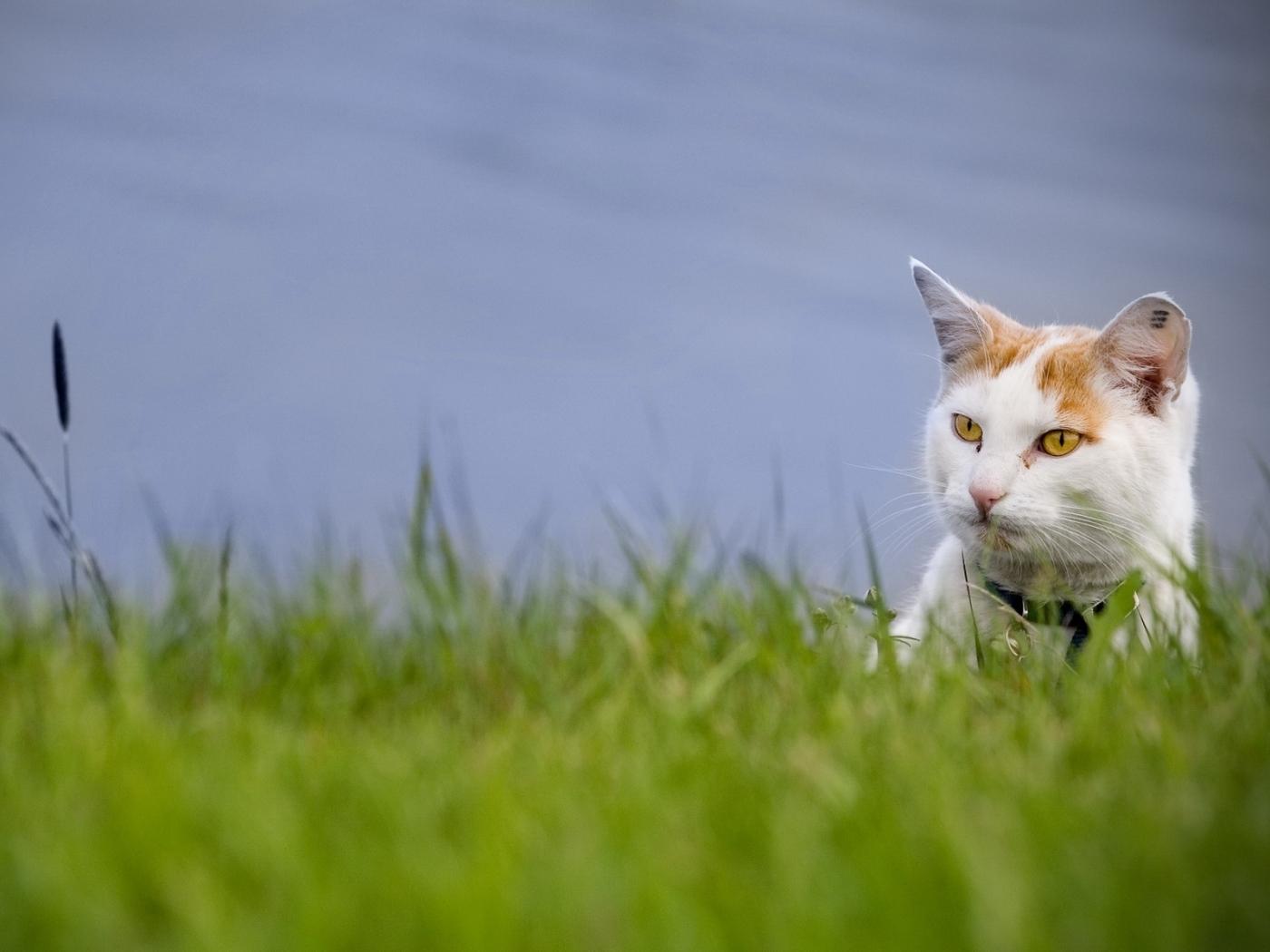 25368 скачать обои Животные, Кошки (Коты, Котики) - заставки и картинки бесплатно