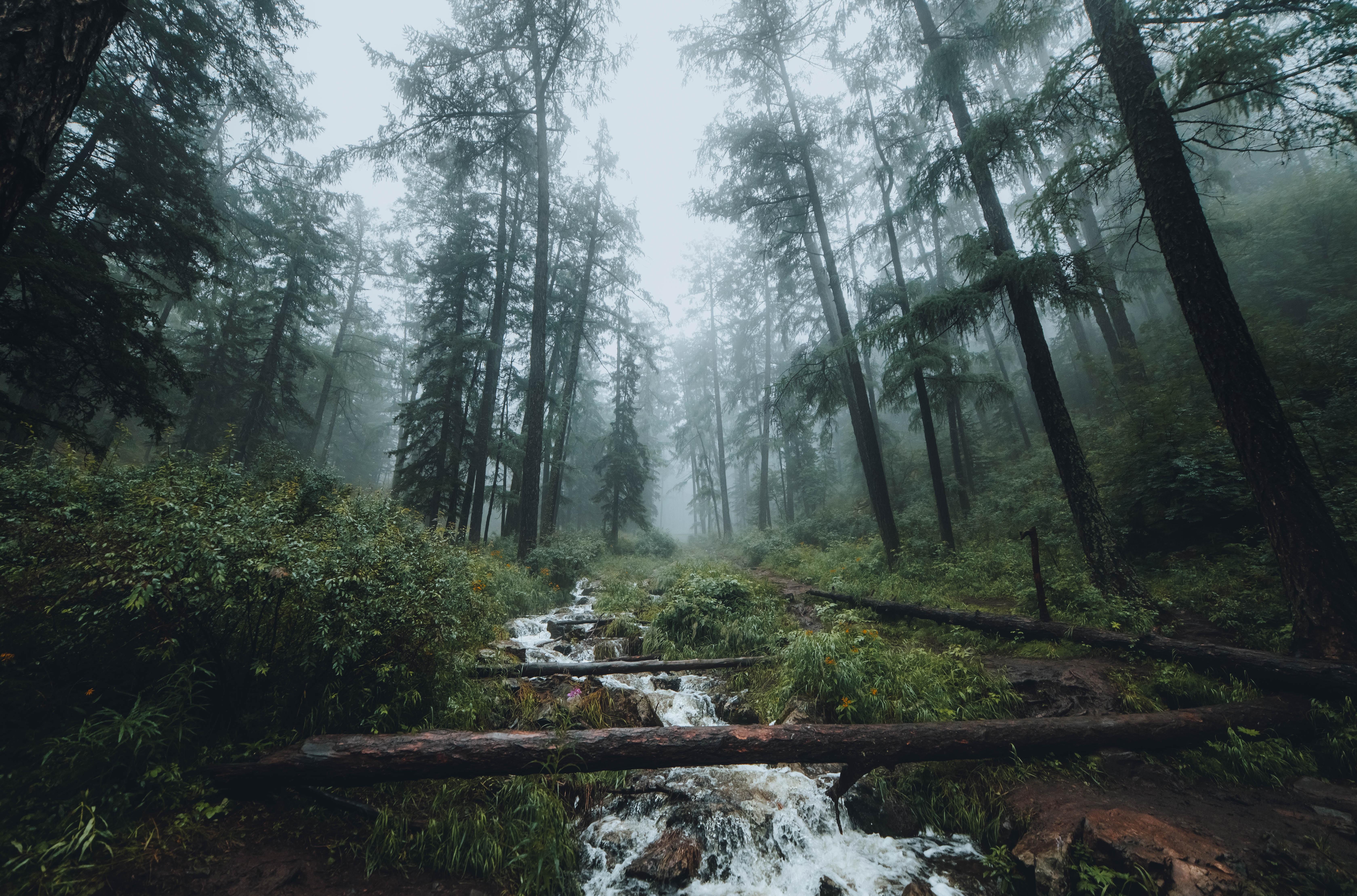 56555 papel de parede 360x640 em seu telefone gratuitamente, baixe imagens Paisagem, Natureza, Árvores, Floresta, Névoa, Nevoeiro, Riacho 360x640 em seu celular