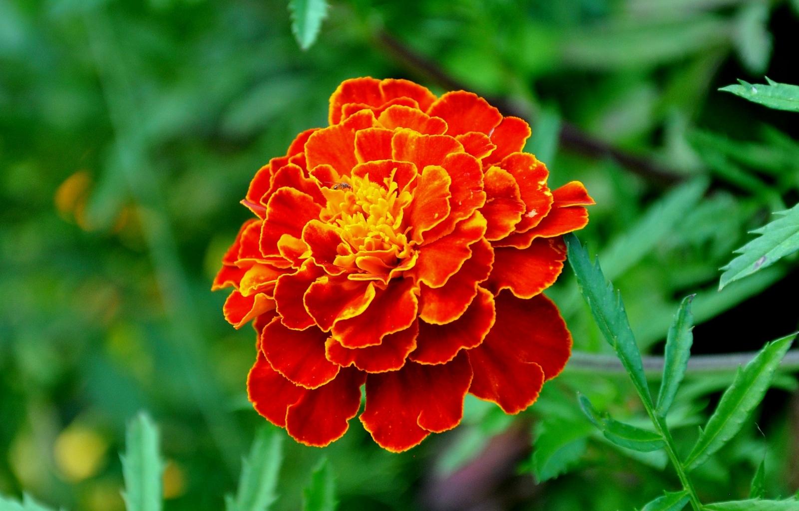 40269 скачать обои Растения, Цветы - заставки и картинки бесплатно