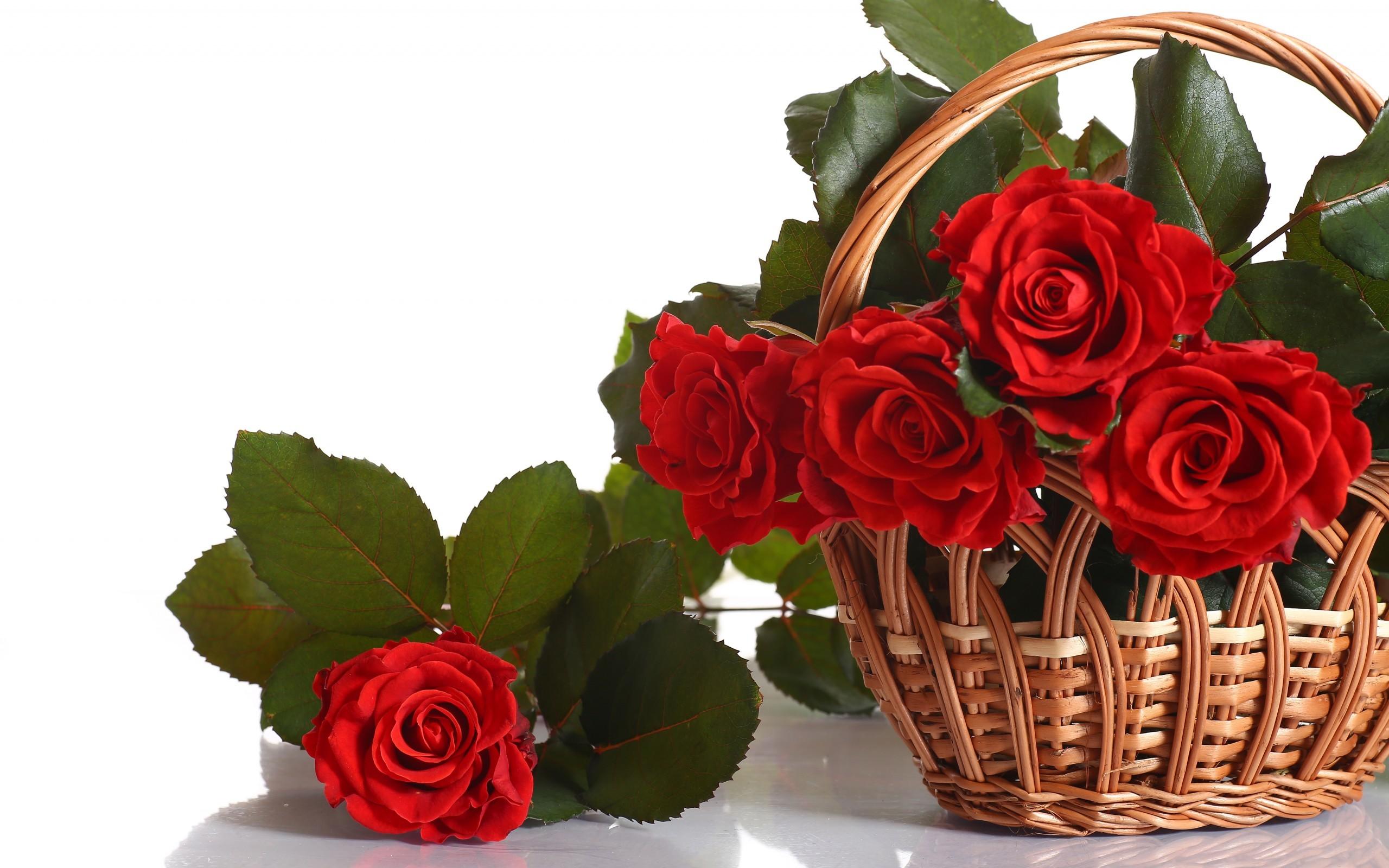 28147 скачать обои Растения, Цветы, Розы - заставки и картинки бесплатно