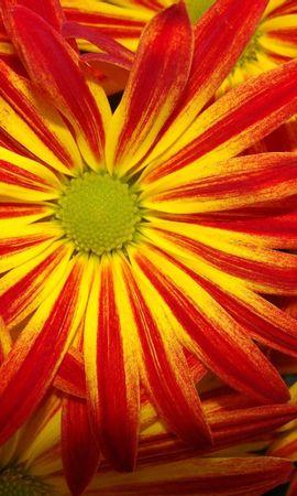 5753 скачать обои Растения, Цветы, Фон - заставки и картинки бесплатно