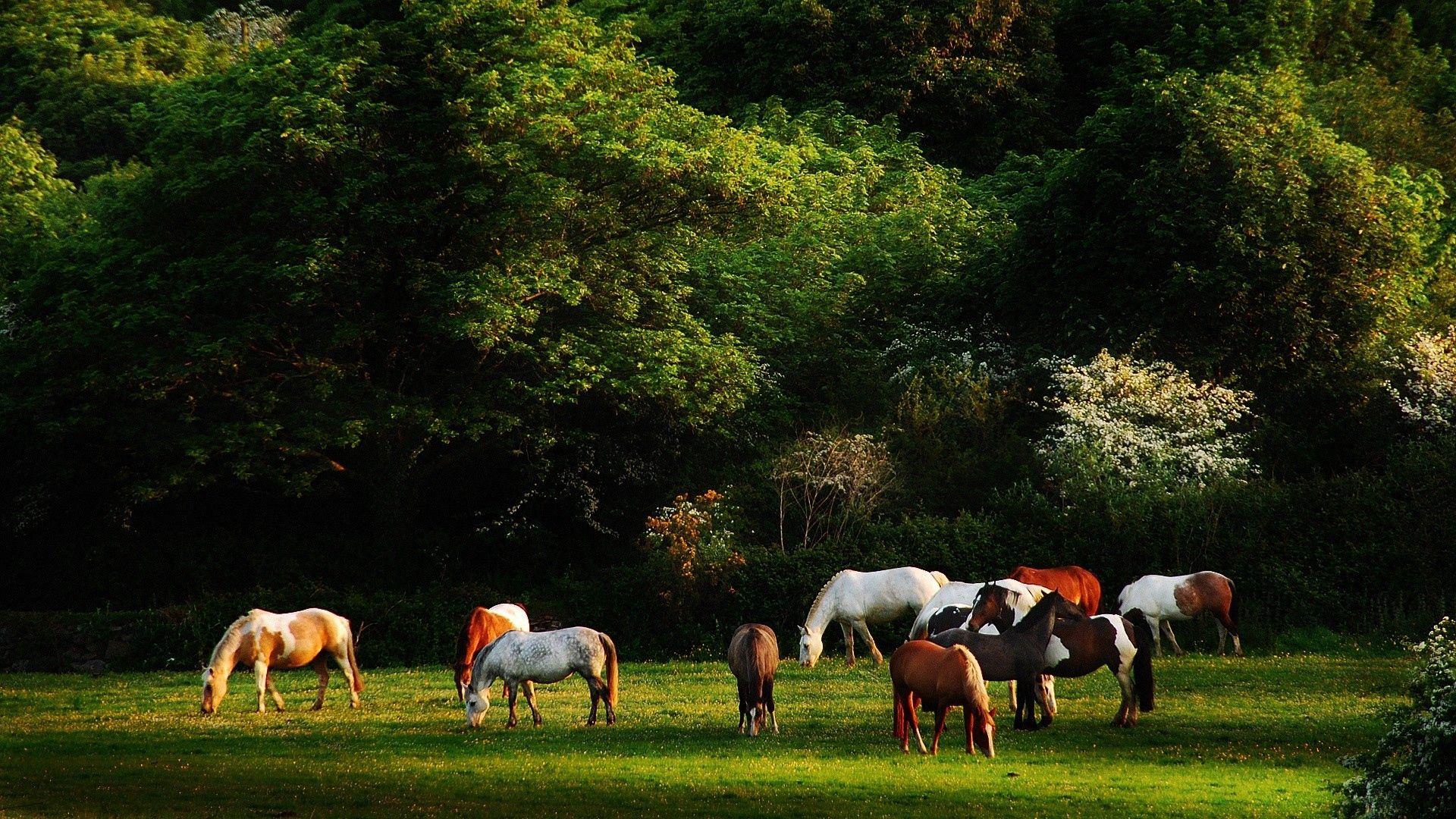 63755 скачать обои Животные, Лошади, Трава, Деревья, Прогулка, Табун - заставки и картинки бесплатно